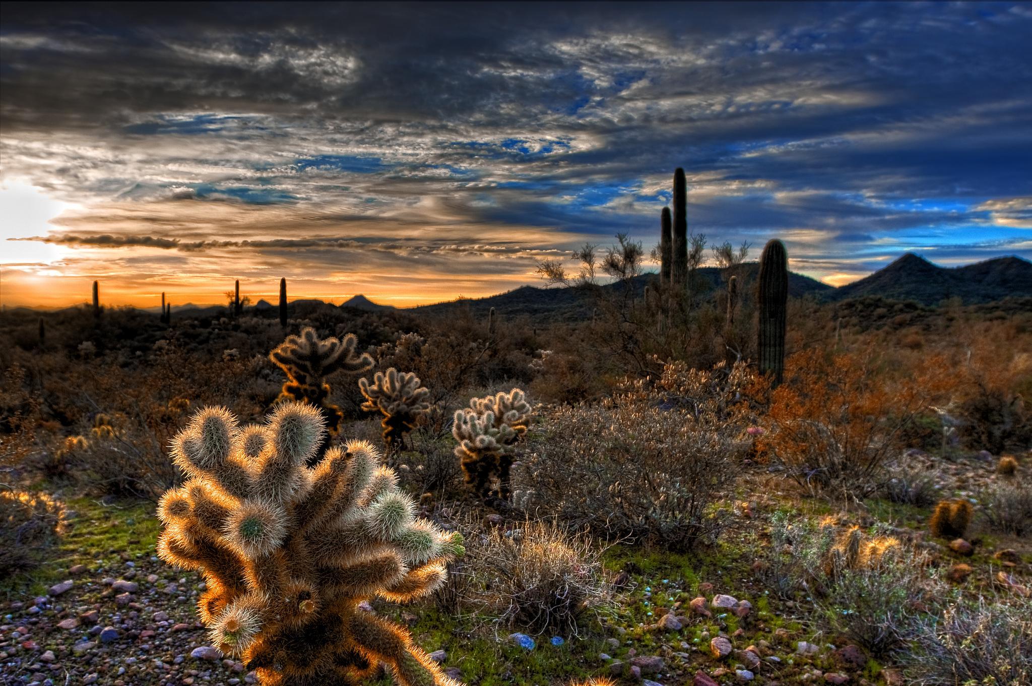 Cactus of Arizona Field Guide (Cacti Identification) Arizona desert cactus pictures