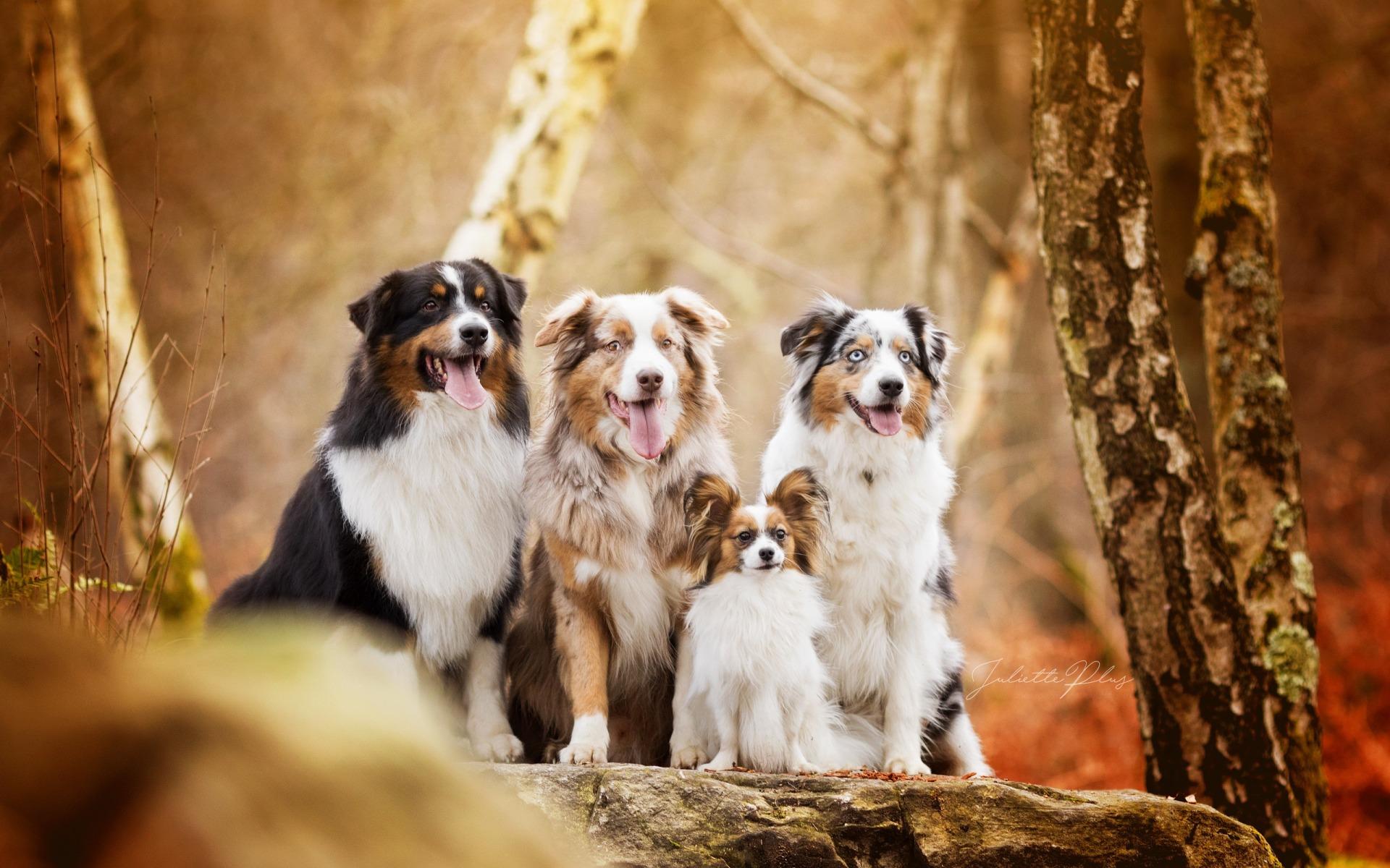 появилась картинки собак разных пород вместе кажется