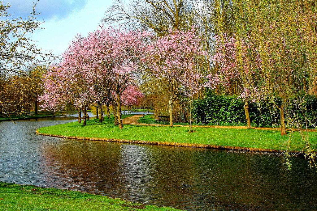 Sfondi Belgio Mechelen Parco Vrijbroekpark Primavera Alberi