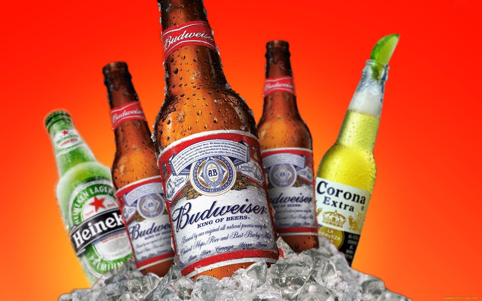 Wallpaper Budweiser Heineken Corona Extra Drops Ice Beer