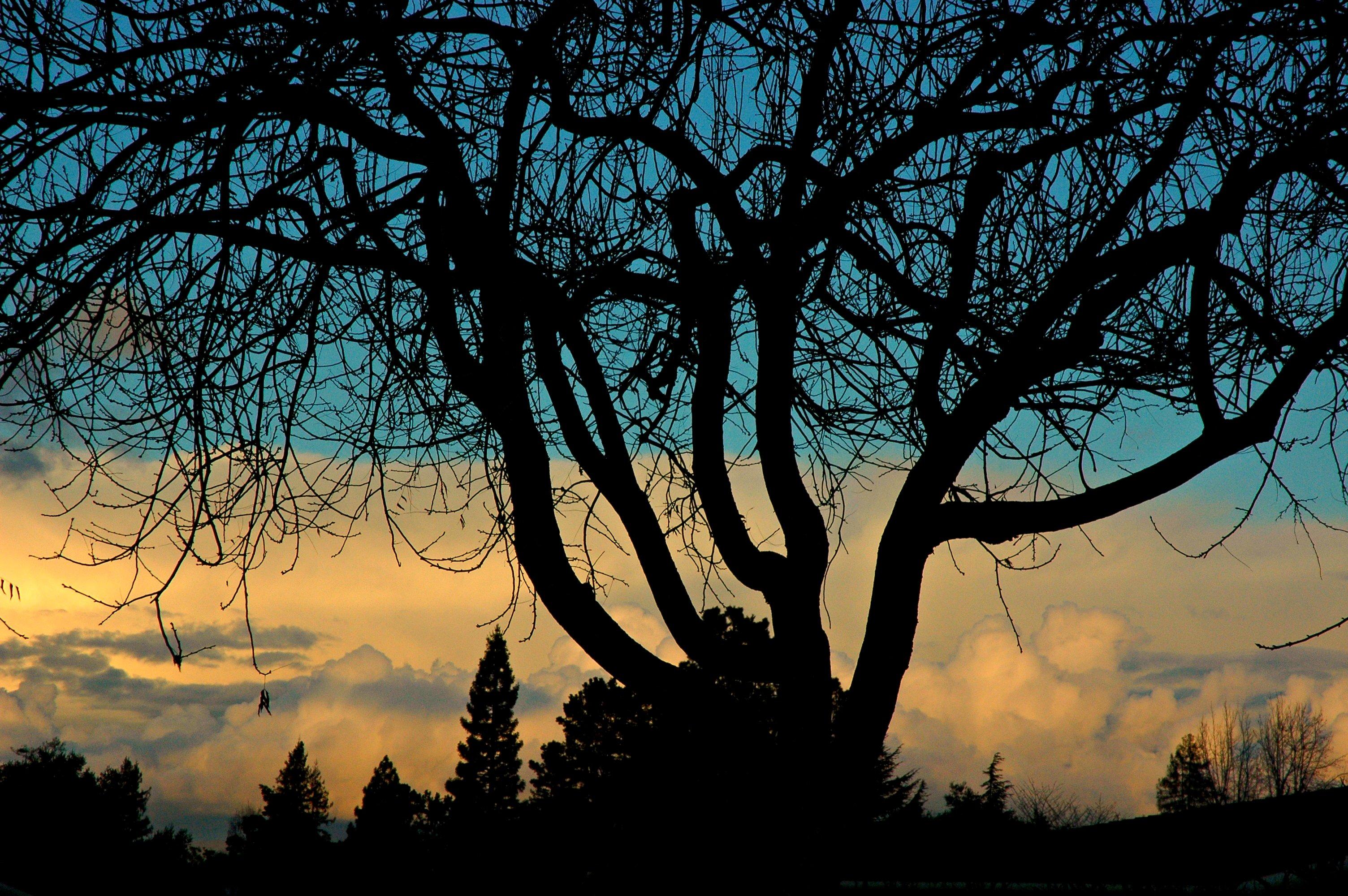 Hintergrundbilder : Kalifornien, USA, Baum, Skelett, Struktur ...