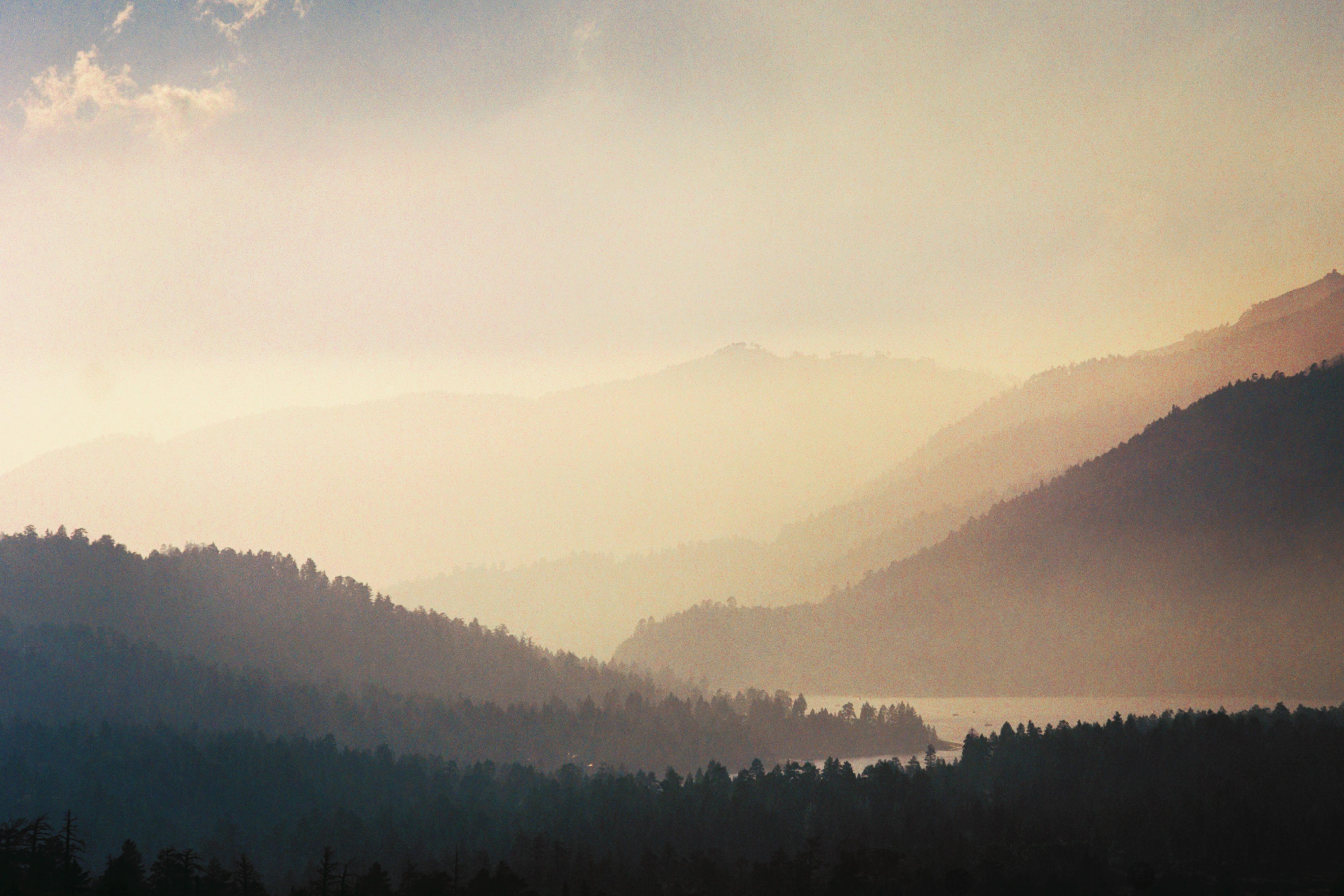 Wallpaper California Bear Wood Morning Original Trees Sky