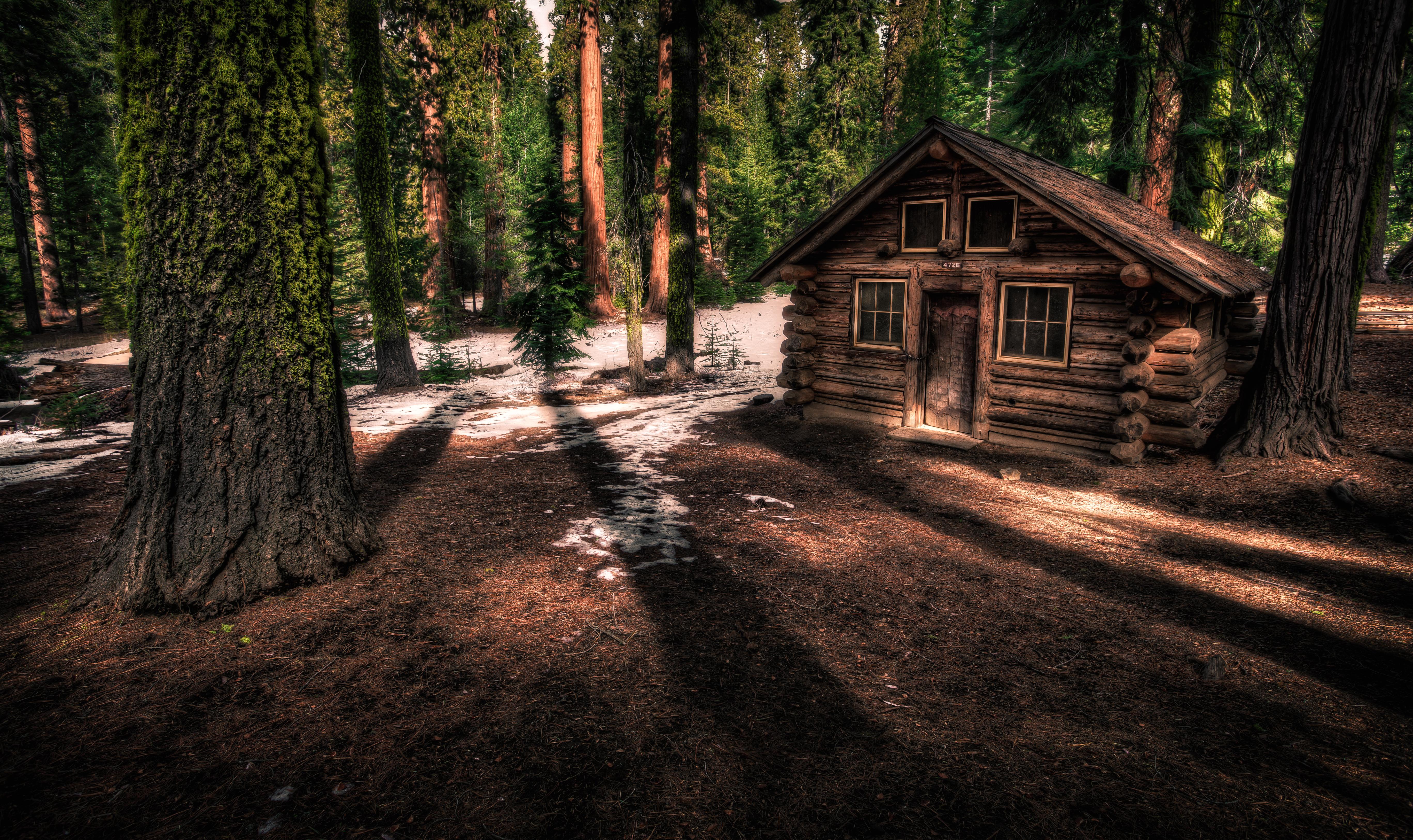 Wallpaper California Park Wood Trees Forest Wooden Big