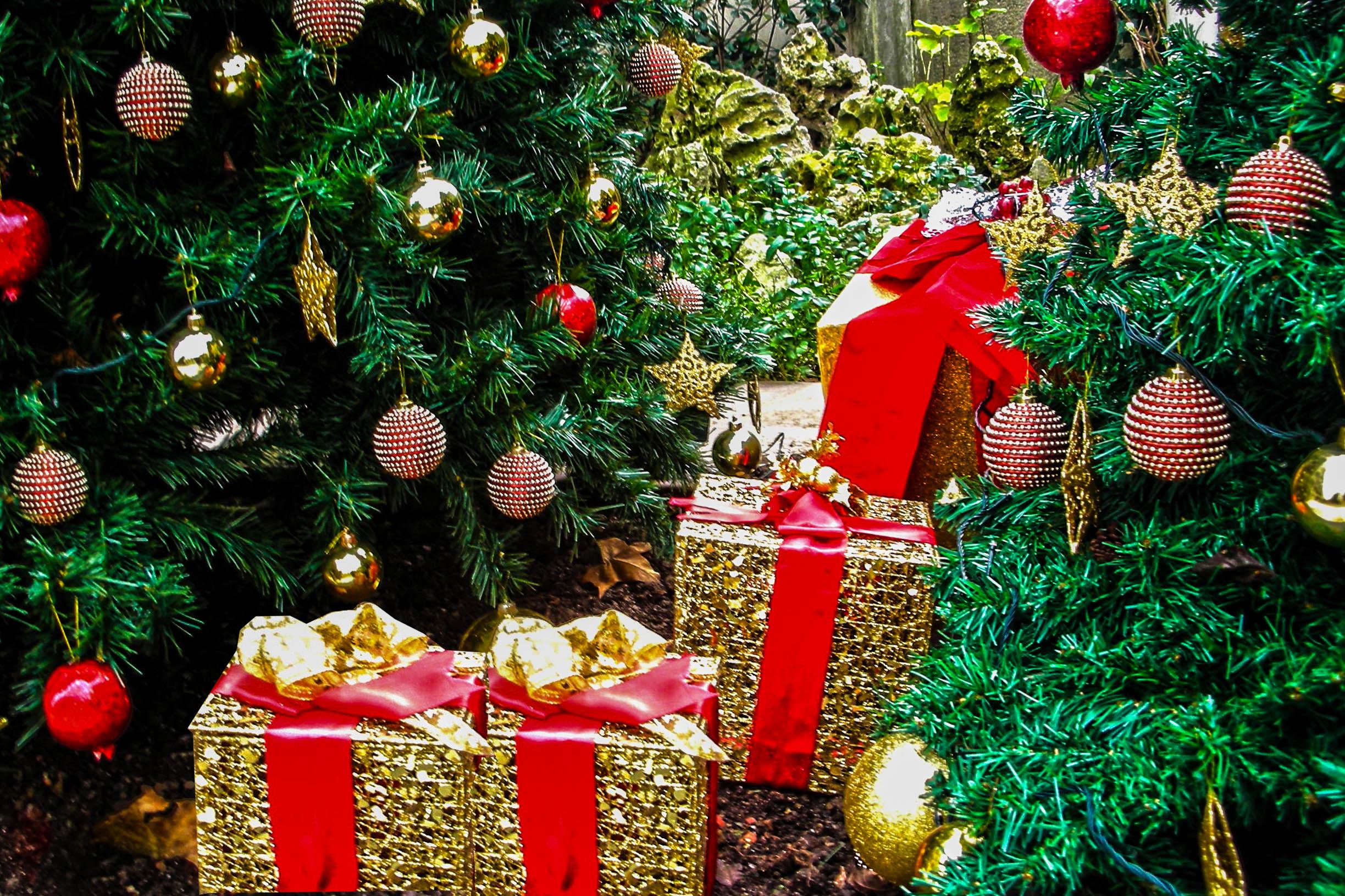 Hintergrundbilder : Kiefer, Box, Istanbul, Neujahr, Weihnachtsbaum ...