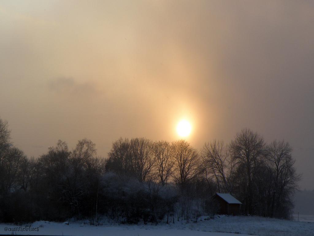 Fond Décran Noël Des Arbres Hiver Lumière Soleil