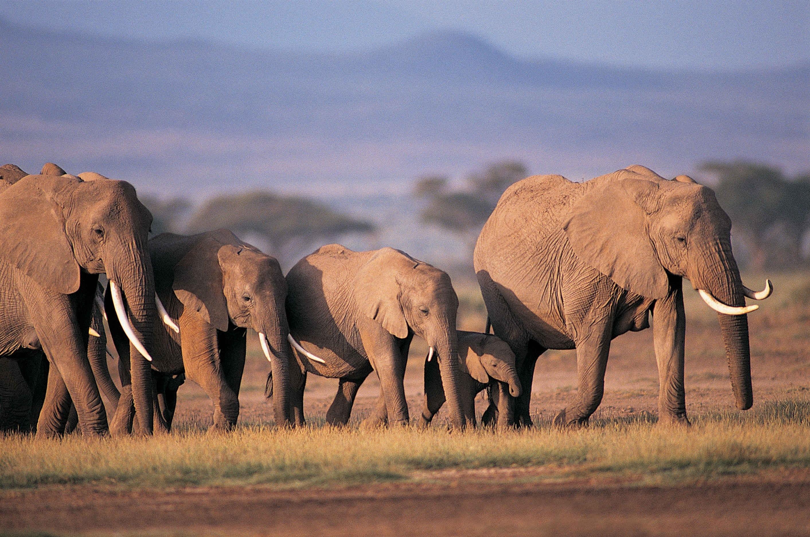 четыре африка крупные картинки этим подходом