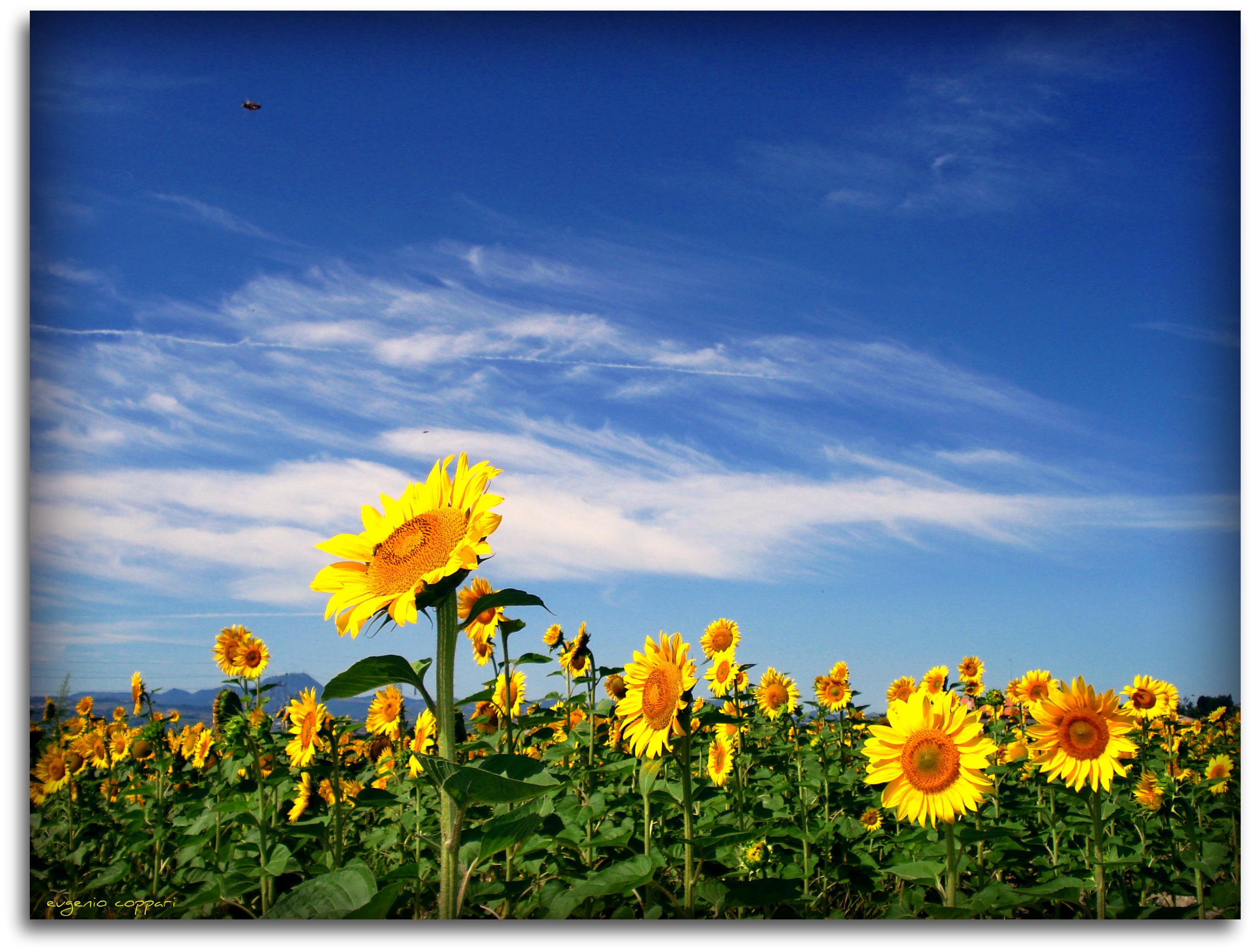 Fiori Jesi.Wallpaper Friends Light Sky Italy White Flower Green Me