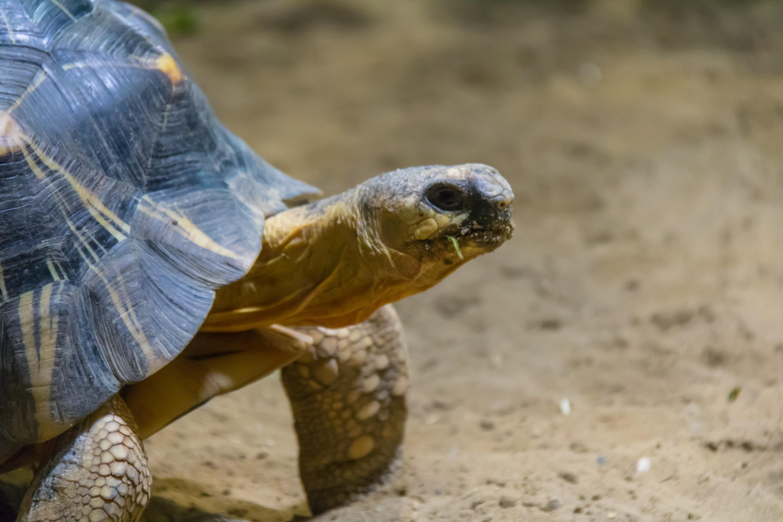 Hintergrundbilder Deutschland Tierwelt Zoo Schildkröte