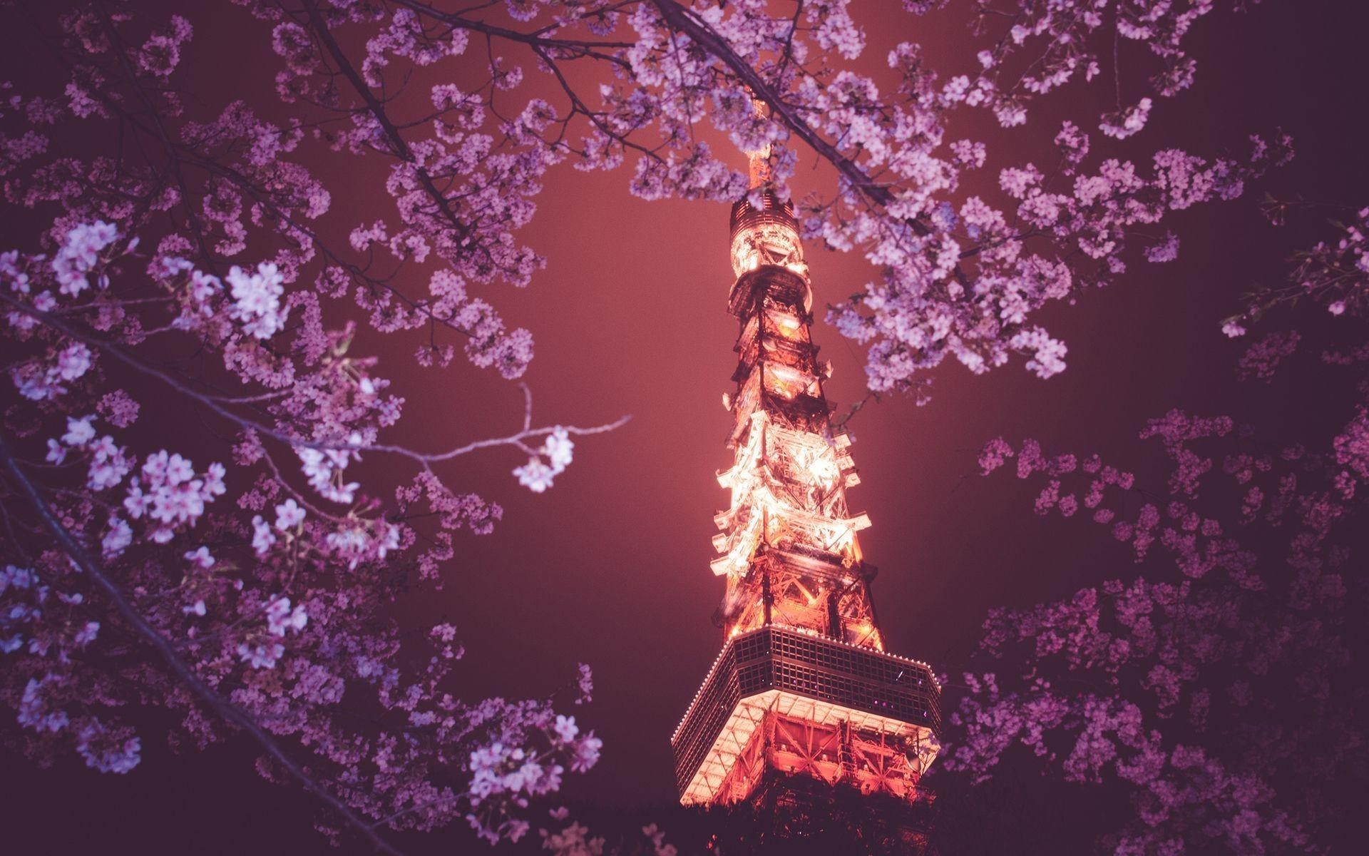 Cool Wallpaper Night Cherry Blossom - Japan-flowers-night-branch-cherry-blossom-blossom-spring-Tokyo-Tokyo-Tower-flower-plant-computer-wallpaper-91748  Photograph.jpg