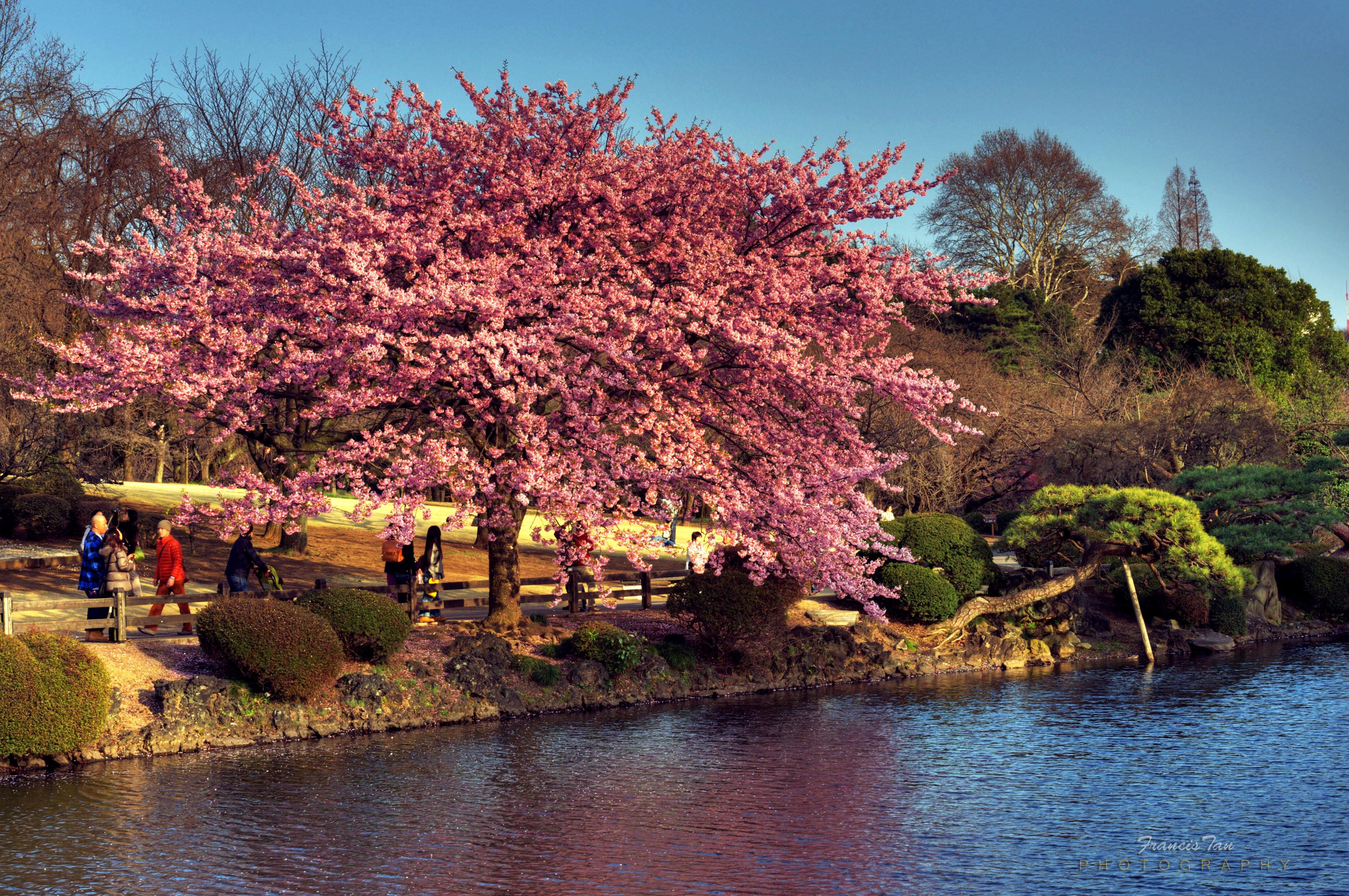 fond d 39 cran japon paysage fleurs jardin lac eau la nature r flexion ciel macro. Black Bedroom Furniture Sets. Home Design Ideas