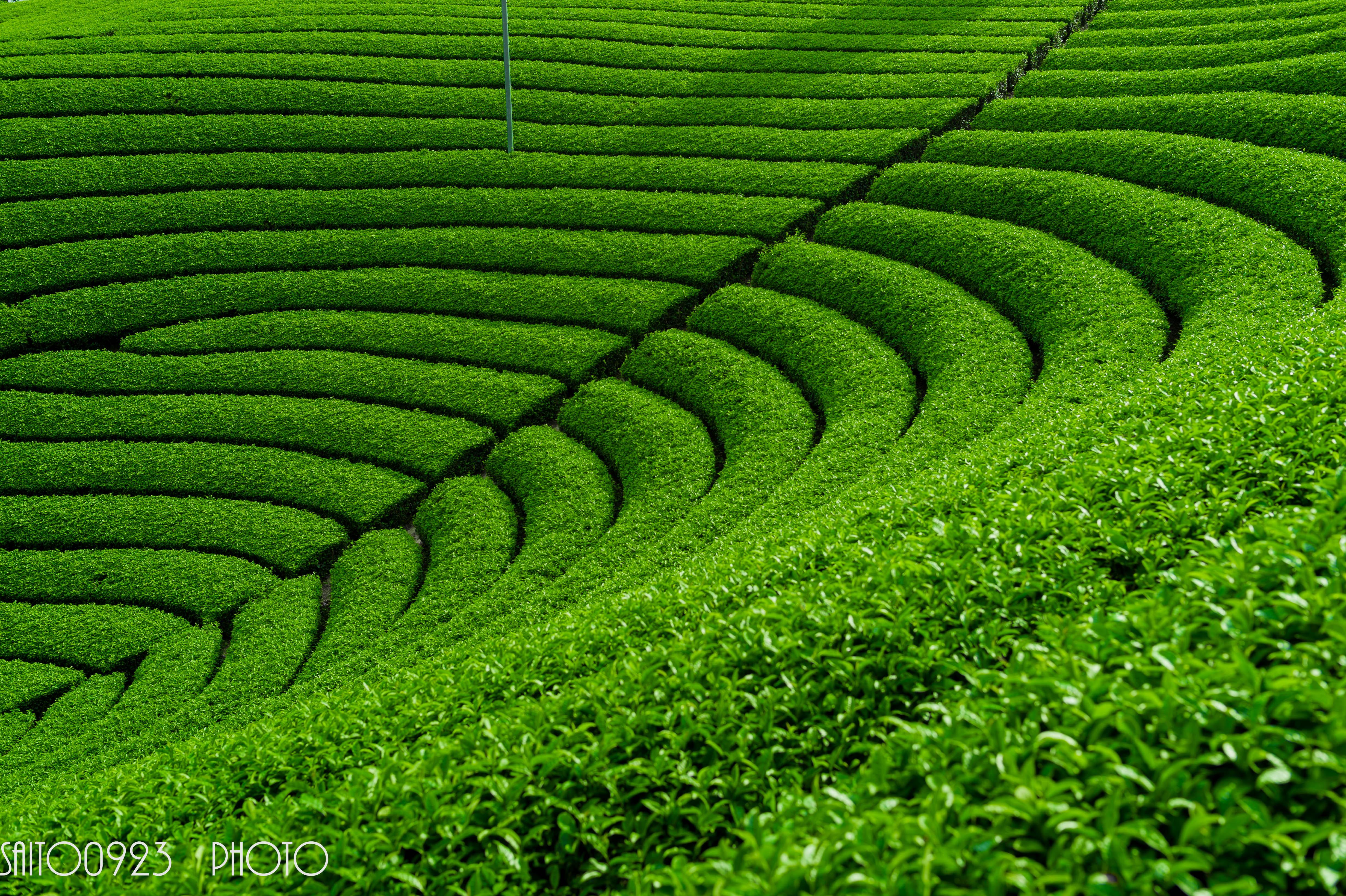 Hintergrundbilder : Japan, Landschaft, Gras, Feld, Grün, Kamera ...