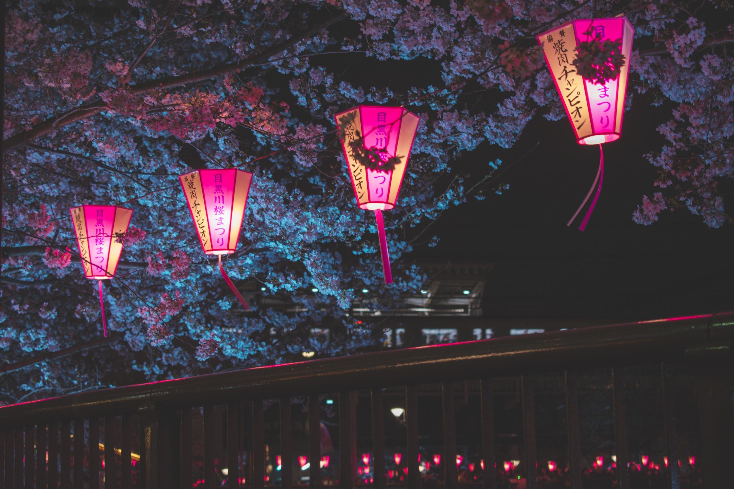 Wallpaper : Jepang, pemandangan, malam, Tokyo, bunga sakura