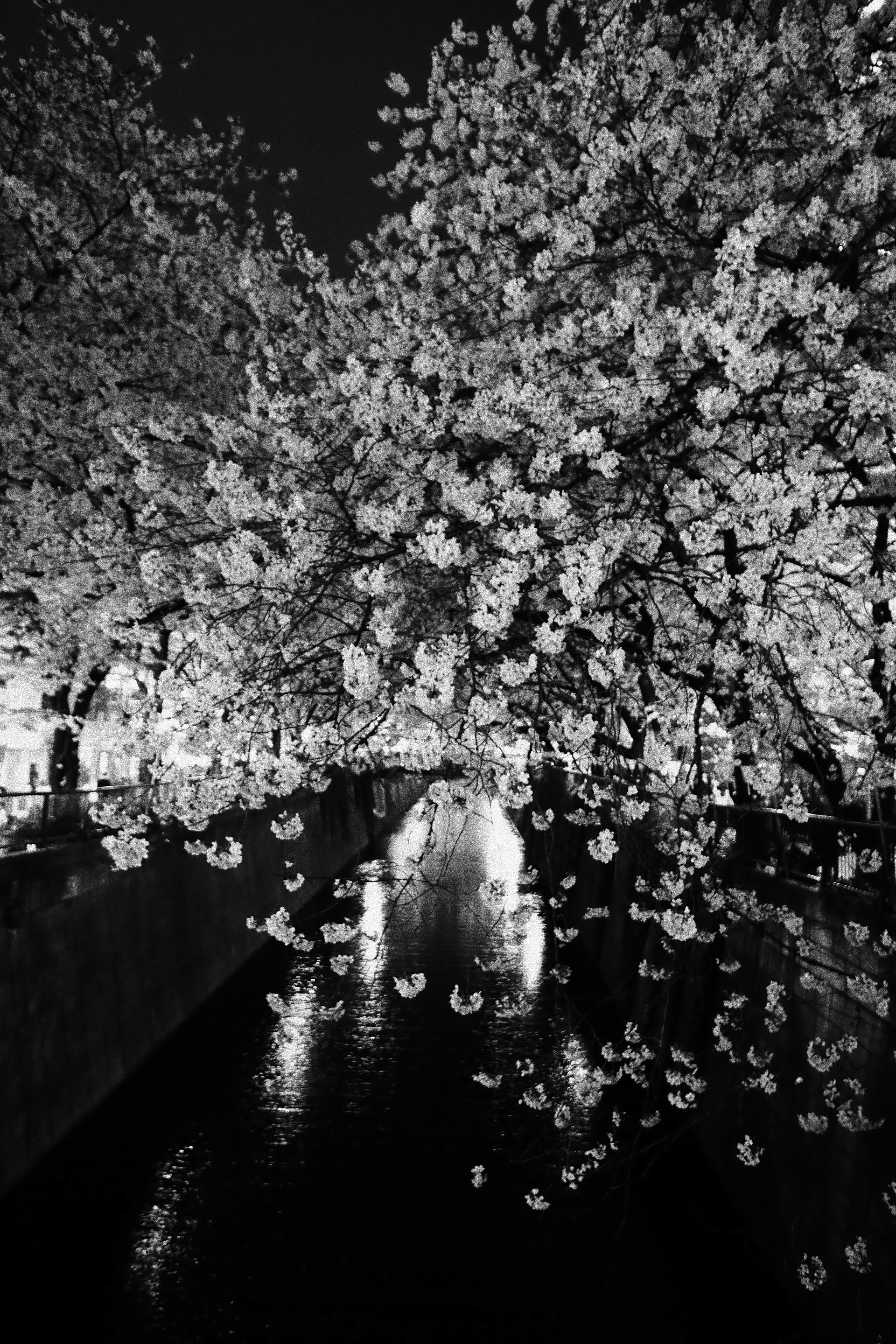 Fond D Ecran Japon Monochrome La Photographie Branche Fleur De