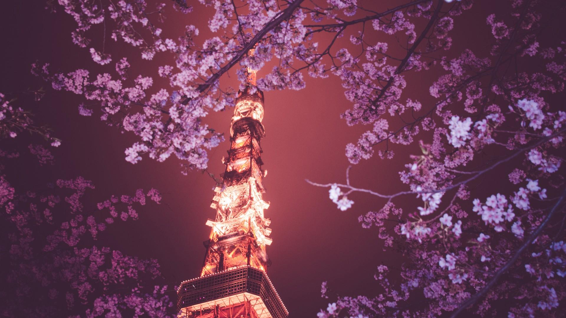 Fantastic Wallpaper Night Cherry Blossom - Japan-night-branch-cherry-blossom-blossom-spring-Tokyo-Tower-Hanami-tree-flower-plant-77534  Gallery.jpg