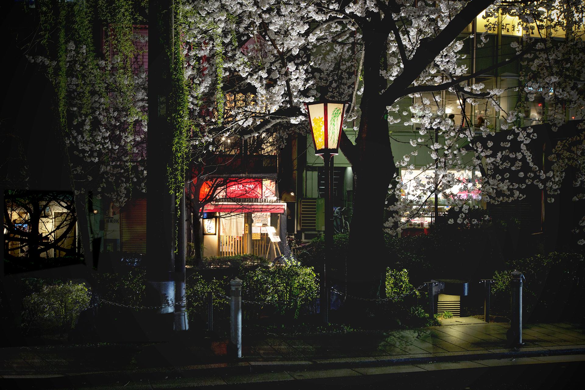 Japan street light window city street night house evening l& blossom Kyoto light tree plant lighting & Wallpaper : Japan street light window city night house evening ...