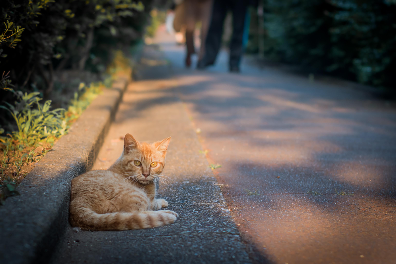 Color cats like - Japan Sunlight Cat Morning Tokyo Panasonic F14 Color Nikkor 50mm Autumn Leaf Setagaya Mammal Cat Like