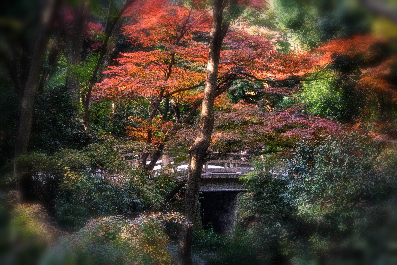 hintergrundbilder japan sonnenlicht landschaft wald bl tter garten natur betrachtung. Black Bedroom Furniture Sets. Home Design Ideas
