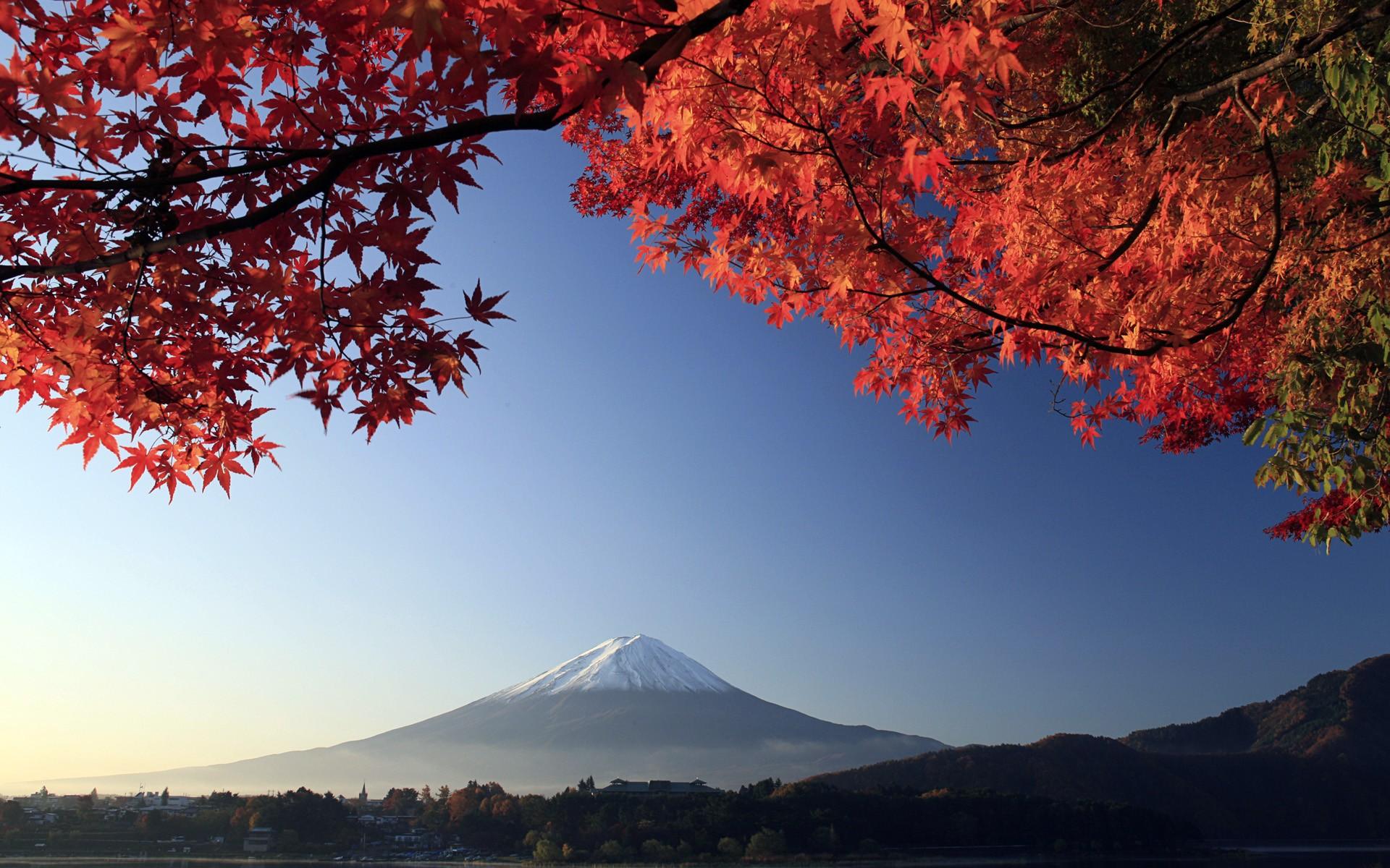 Японский пейзаж с кленом фото