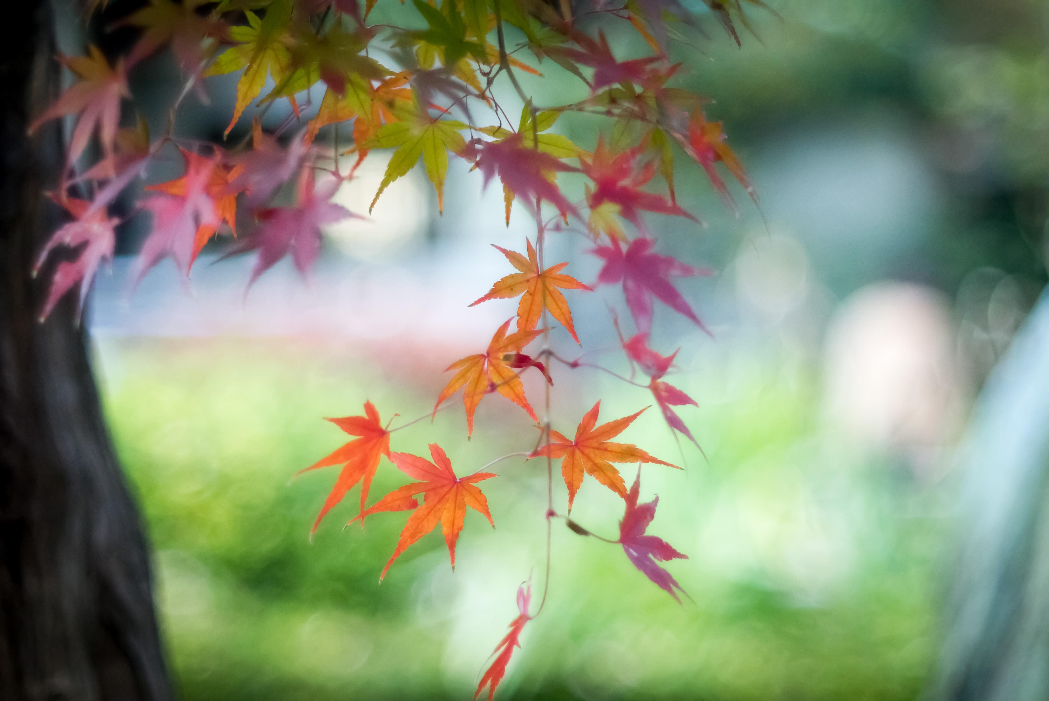 Wallpaper : Japan, sunlight, leaves, nature, grass, branch, green ...