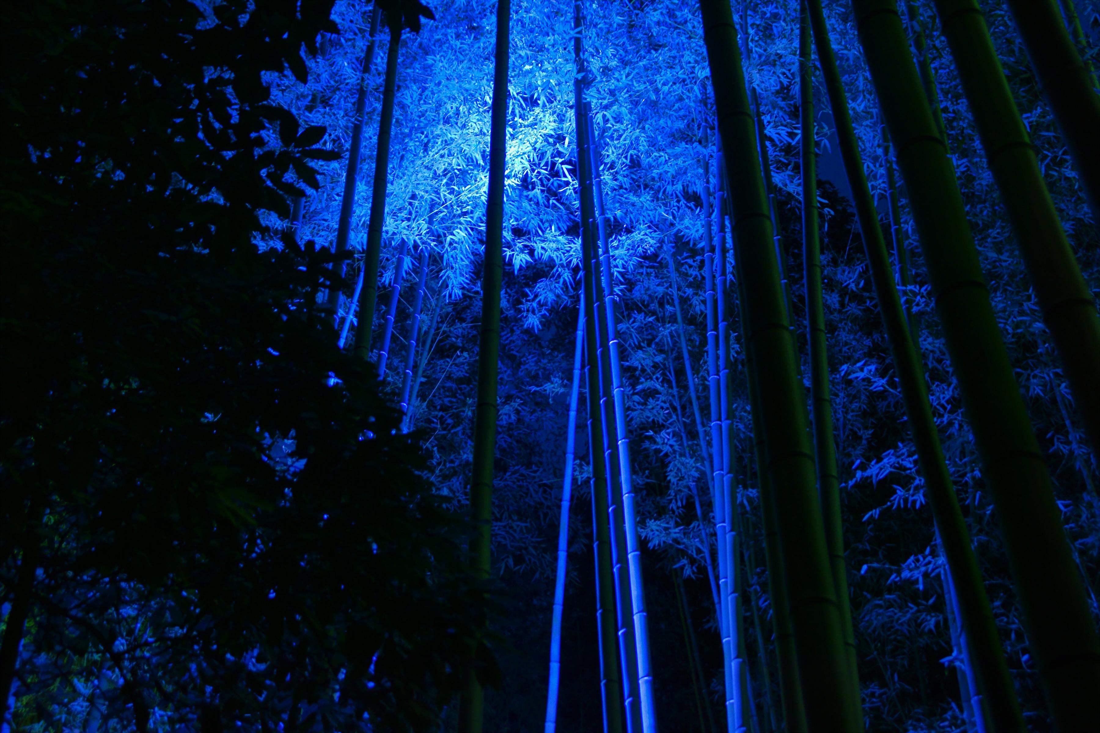 Sfondi Giappone Luce Del Sole Notte Natura Riflessione