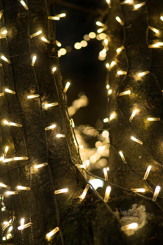 japn luz de sol noche reflexin sony rbol de navidad navidad luces de navidad tokio jp
