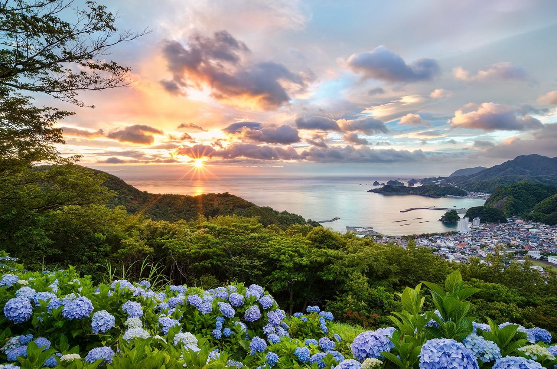 Море с цветами картинки
