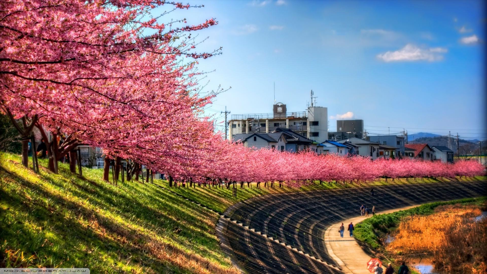 Wallpaper Japan Trees Landscape City Grass Sky Field