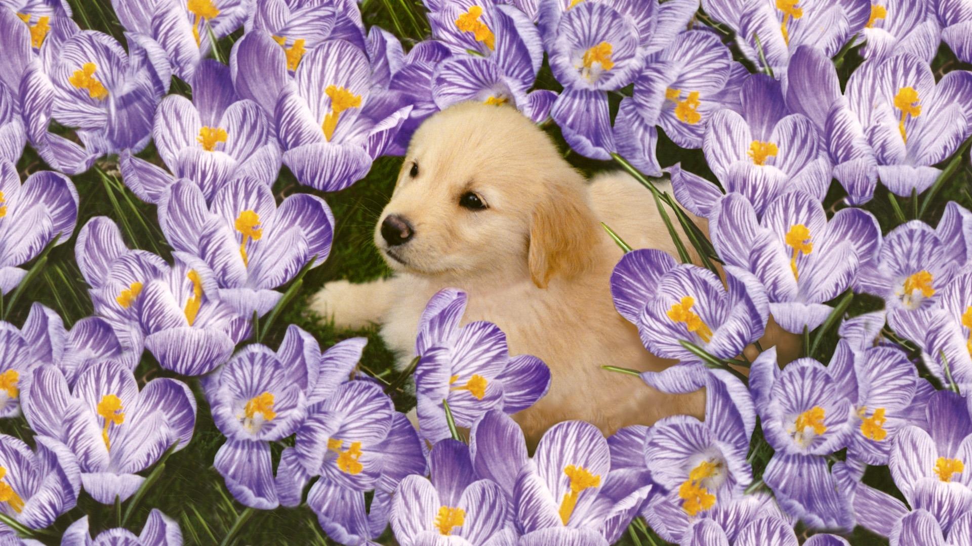 красивые открытки с цветами и животными зависимости способа производства