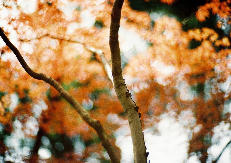 Leica Oder Zeiss Entfernungsmesser : Hintergrundbilder : leica baum film natur japan analoge zeiss