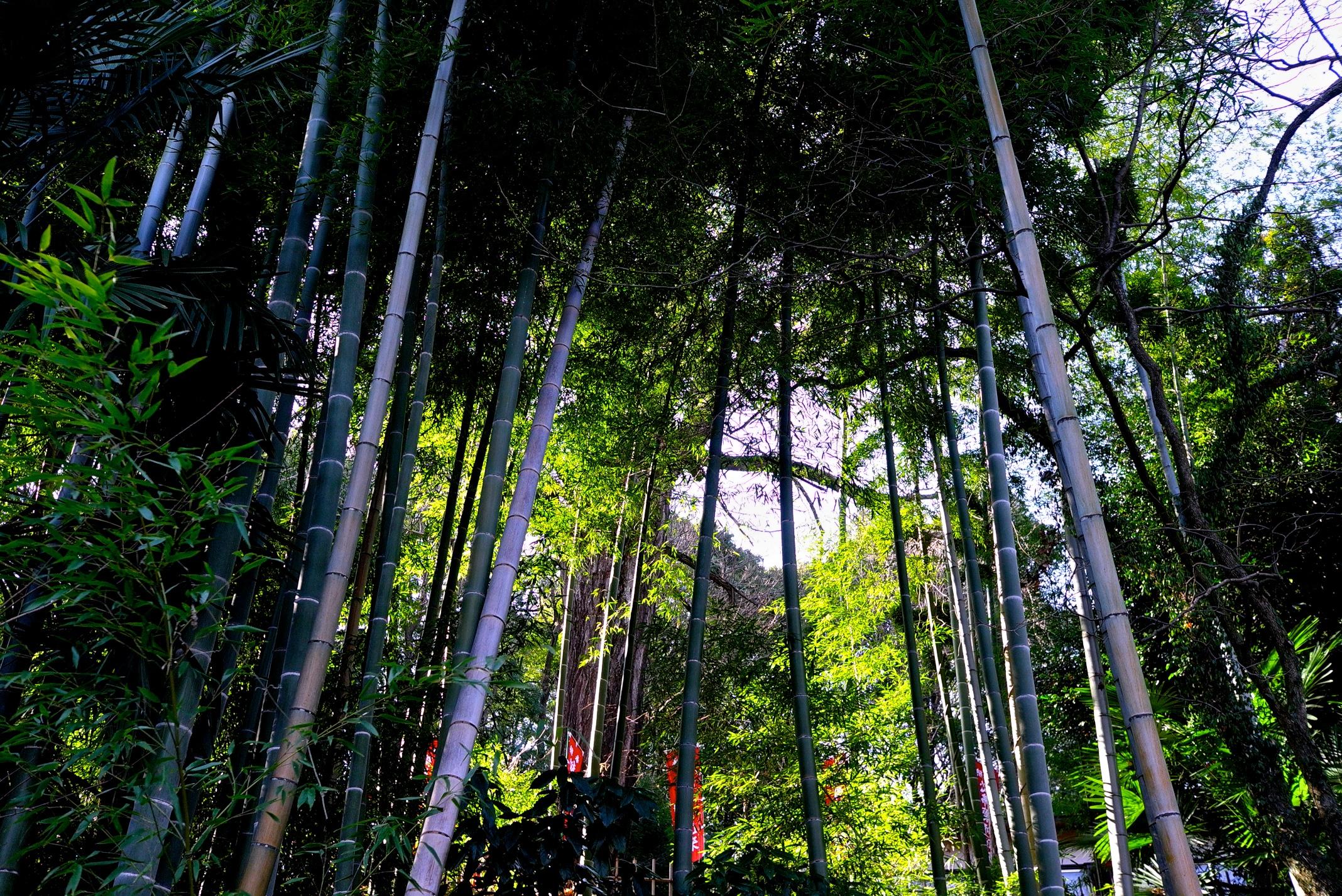 Hintergrundbilder Leica Winter Grun Wald Garten Tempel