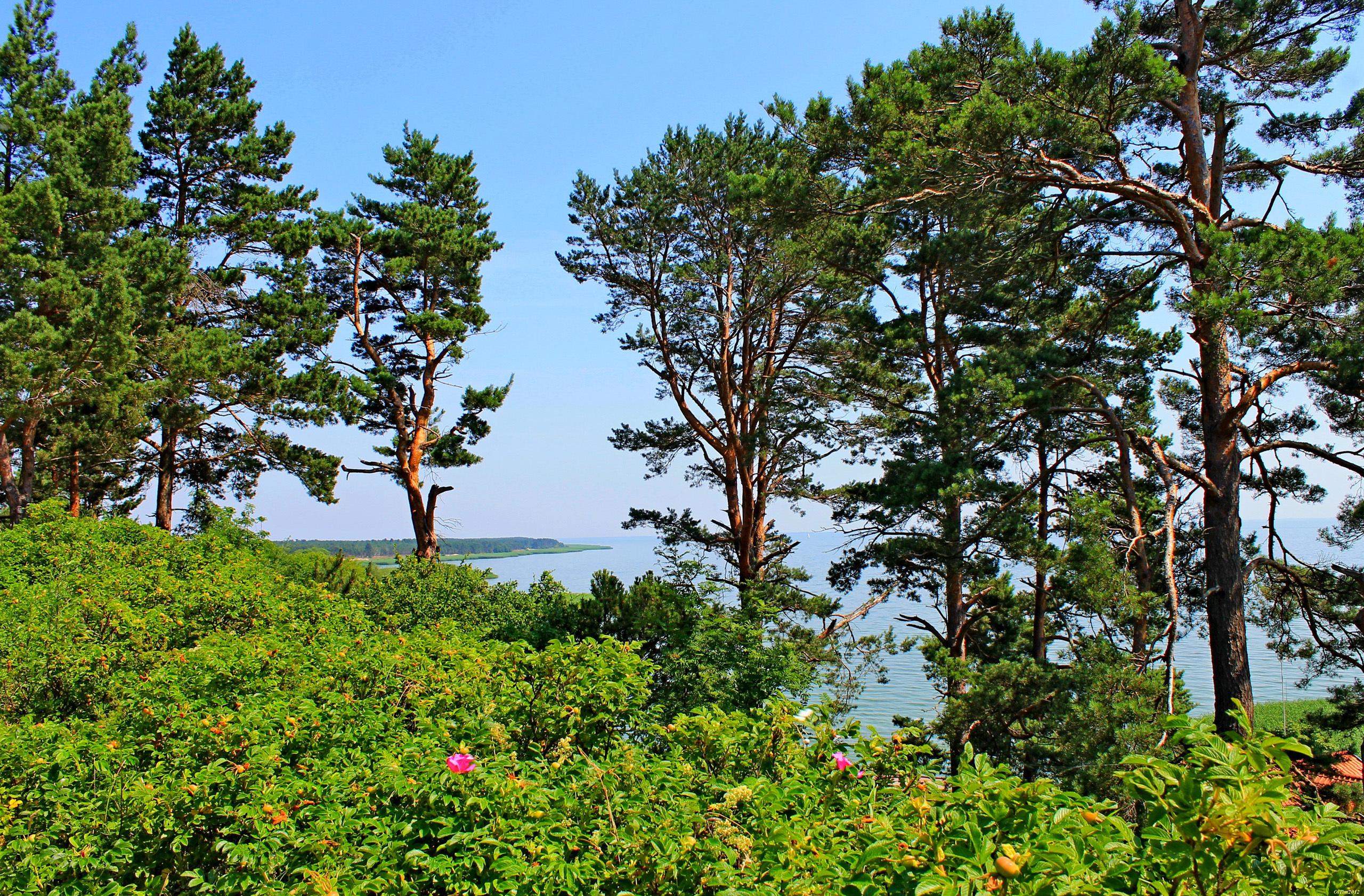 картинка соснового леса отдых на море сегодня, увы