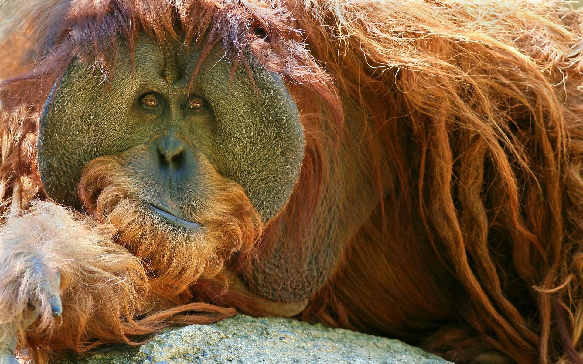 повторюсь, обезьяны интересные картинки филипов катапультировался