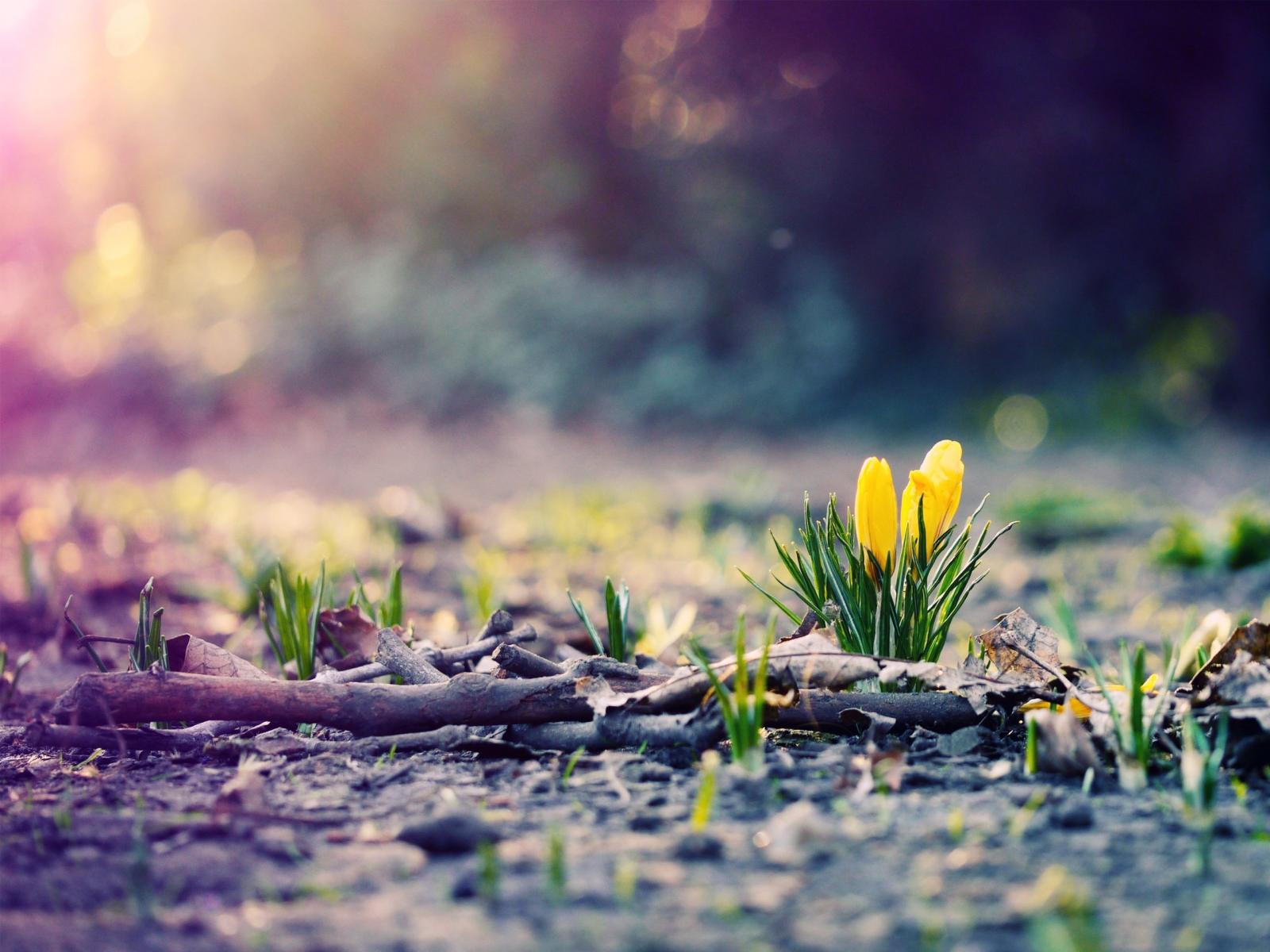 Картинки к началу новой жизни в природе