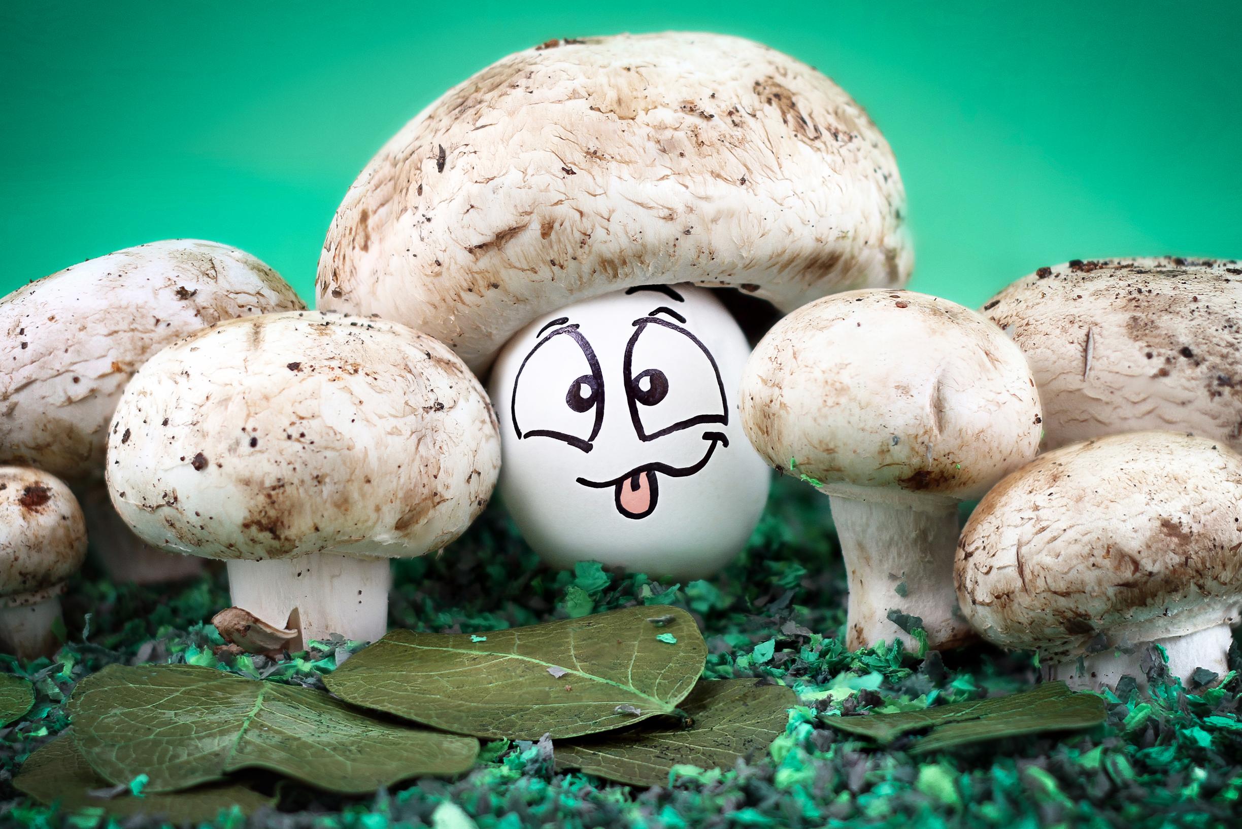 Картинки смешной гриб, поздравление летием