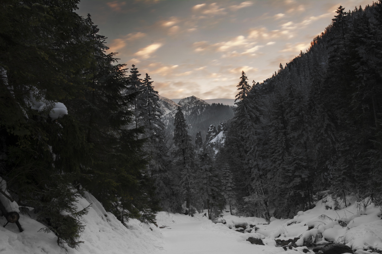 Fond D Ecran Zakopane Tatry Tatras Montagnes Vallee