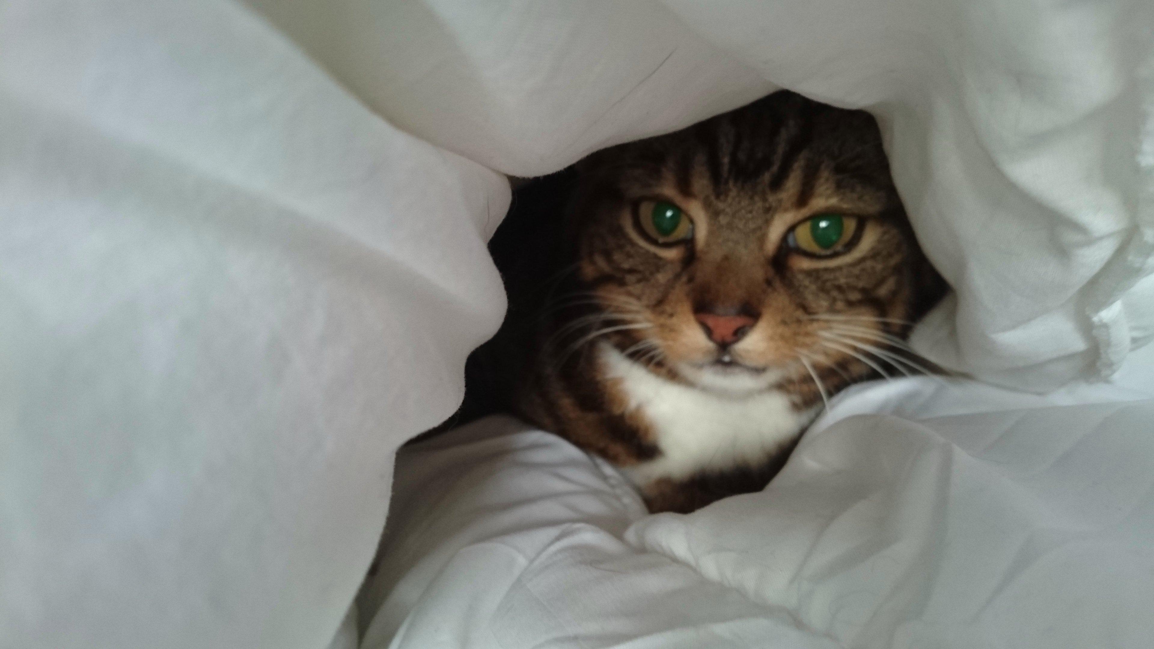 Wallpaper Animal Cat Cats Eye Greeneyes Kitten Katze Gato Paw Sony Tabby Whiskers Xperia Bed Comfy 3840x2160 1123607 Hd Wallpapers Wallhere