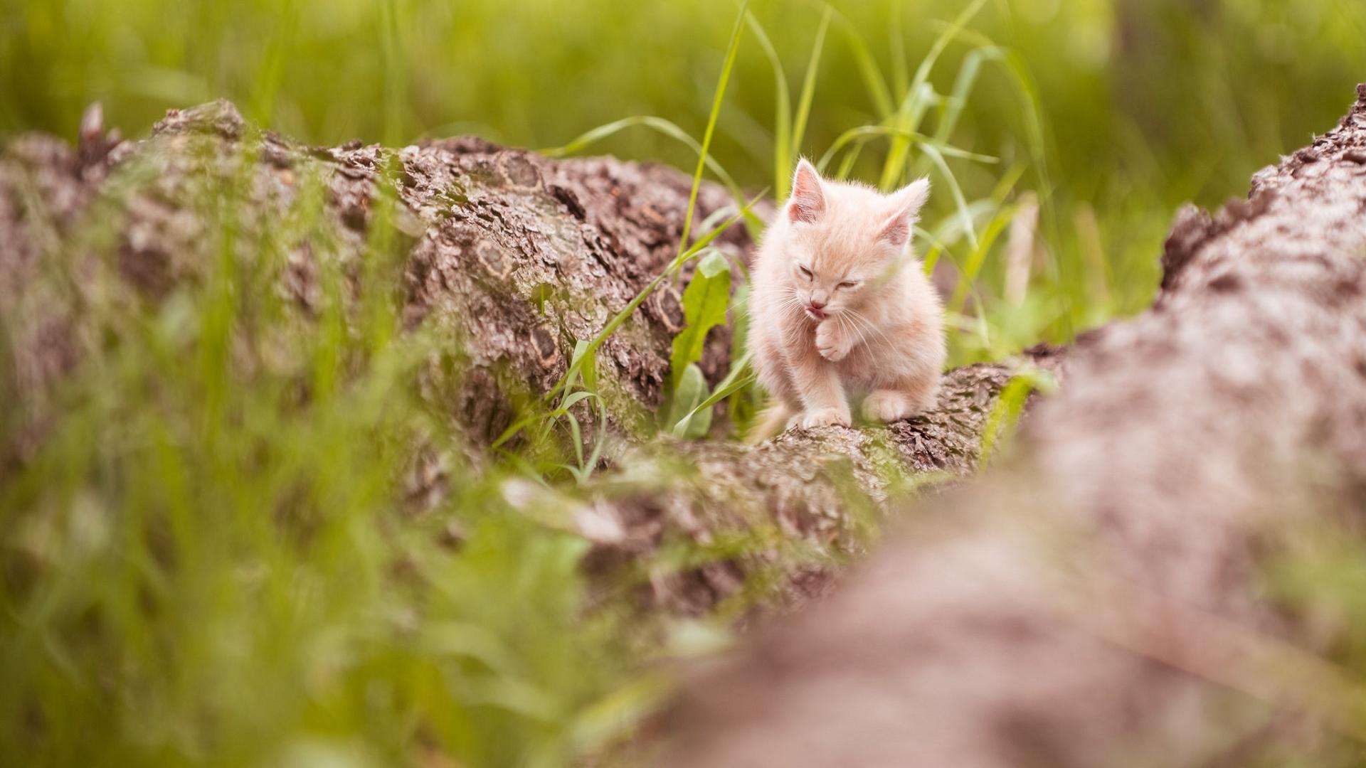 Hintergrundbilder Tiere Katze Haustier Katzchen