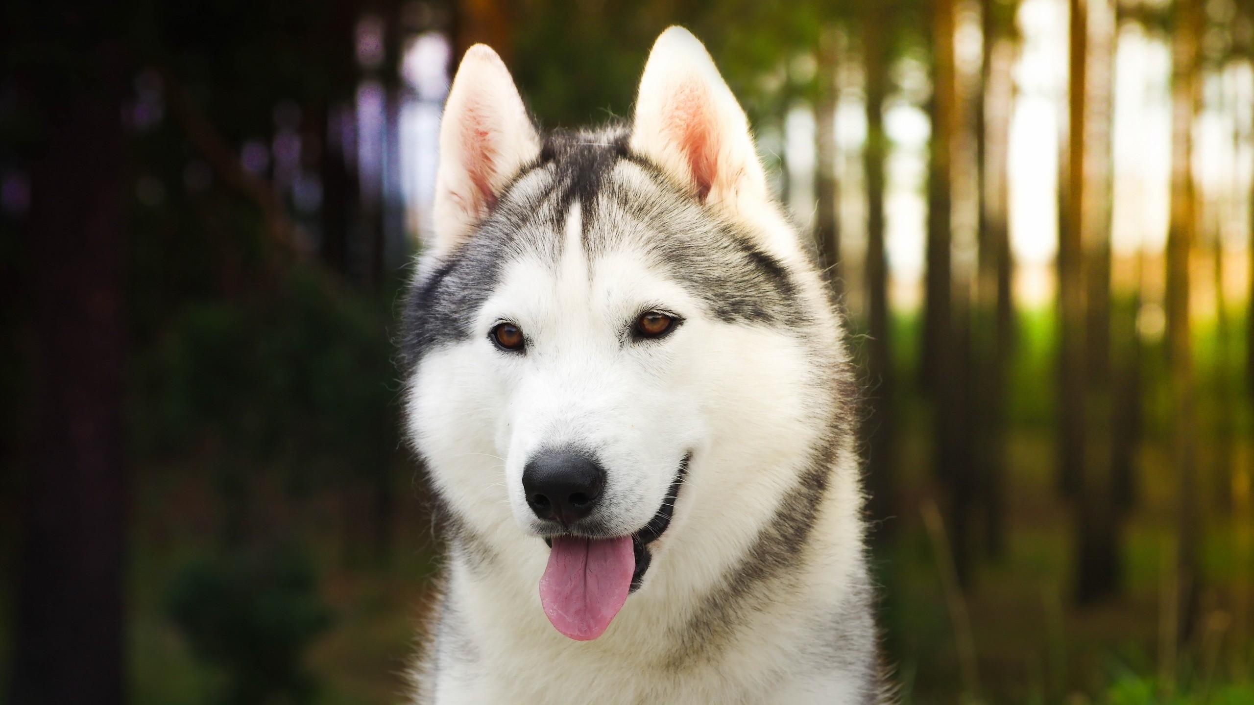 38+ Anjing jenis malamute terupdate