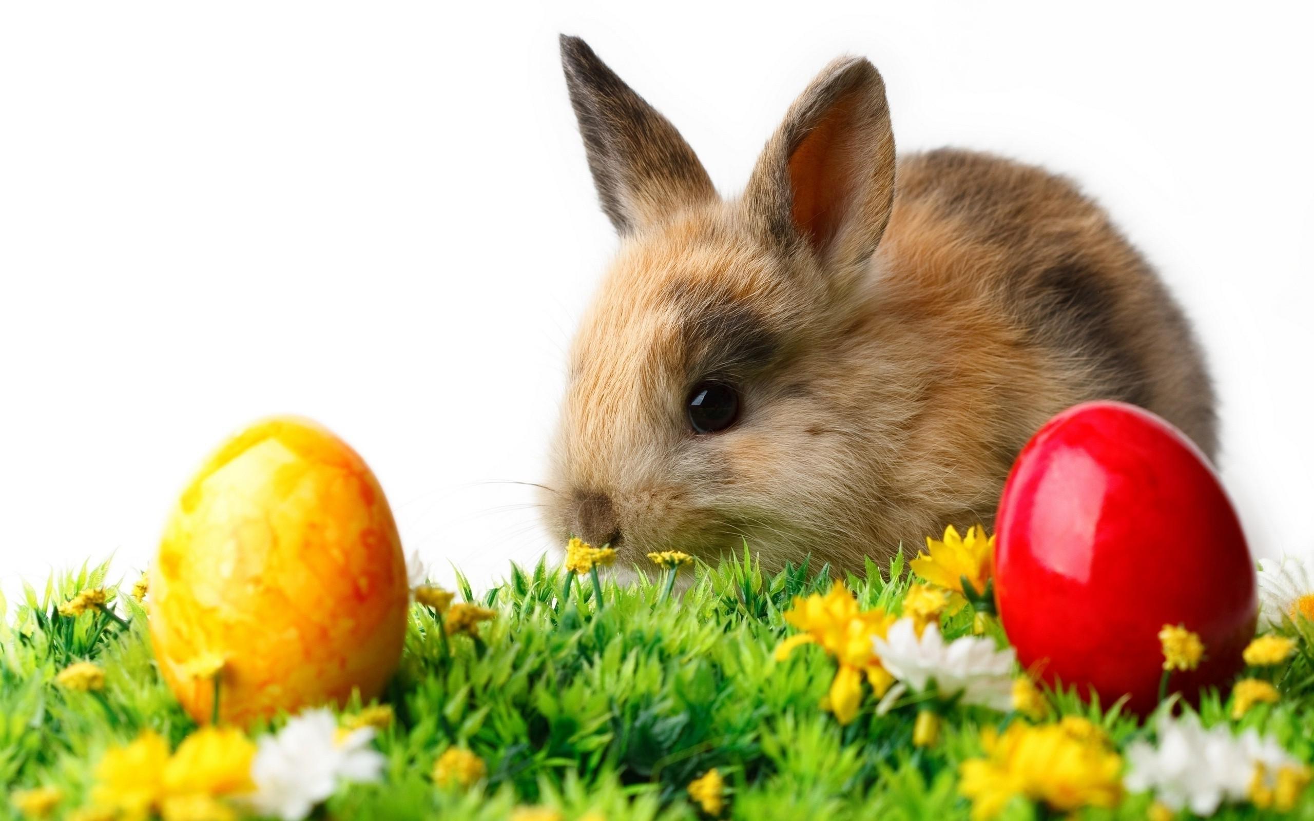 Fondos De Pantalla De Animales Bebes: Fondos De Pantalla : Animales, Huevos, Animales Bebés