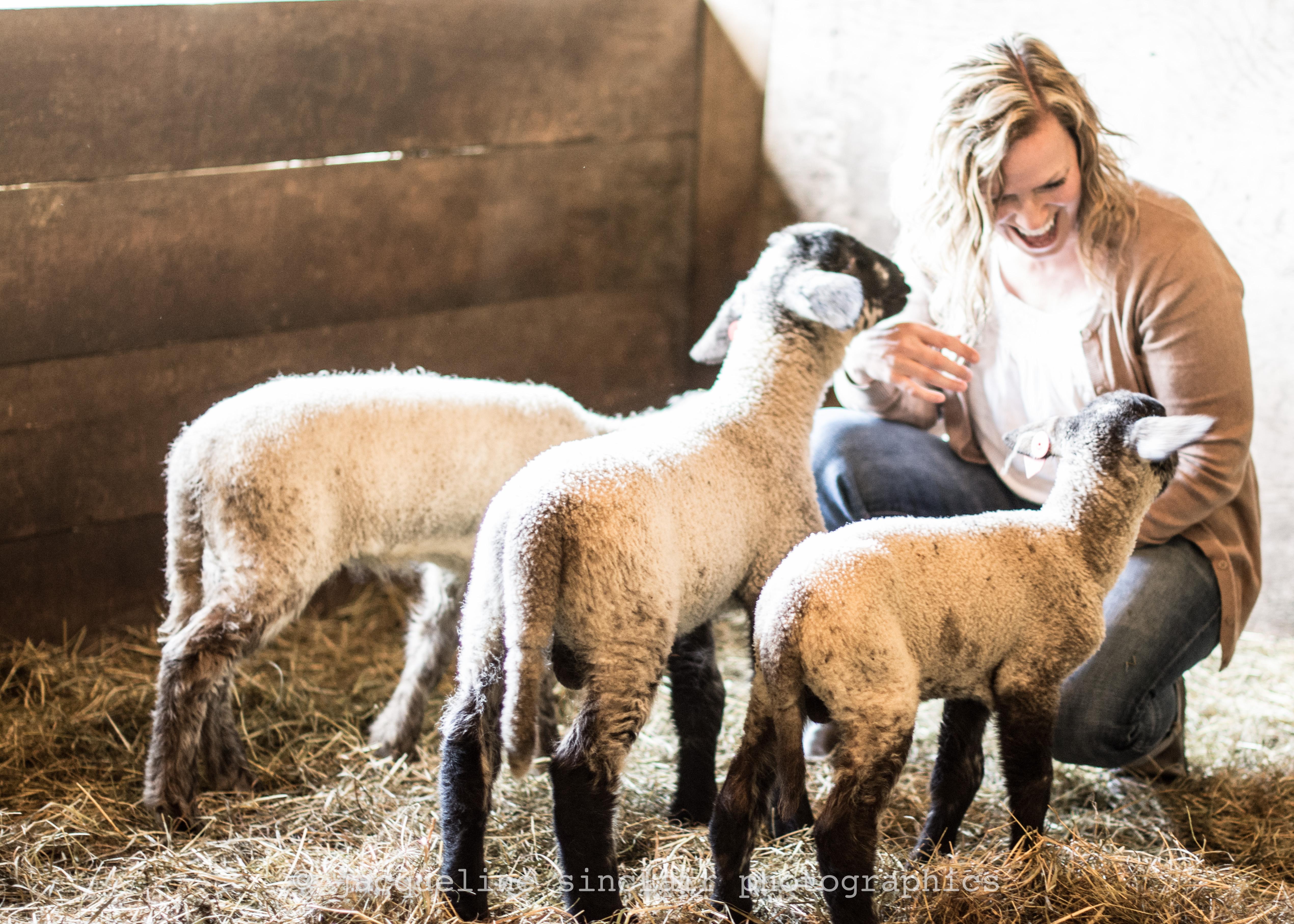 Wallpaper Animals Farm Baby Barn Straw Sheep Hay Lamb Ears Livestock Alpaca Selfie Pasture Llama Herd Babies Cow Goat Family Camel Like Mammal Lambs 5081x3629 874373 Hd Wallpapers Wallhere