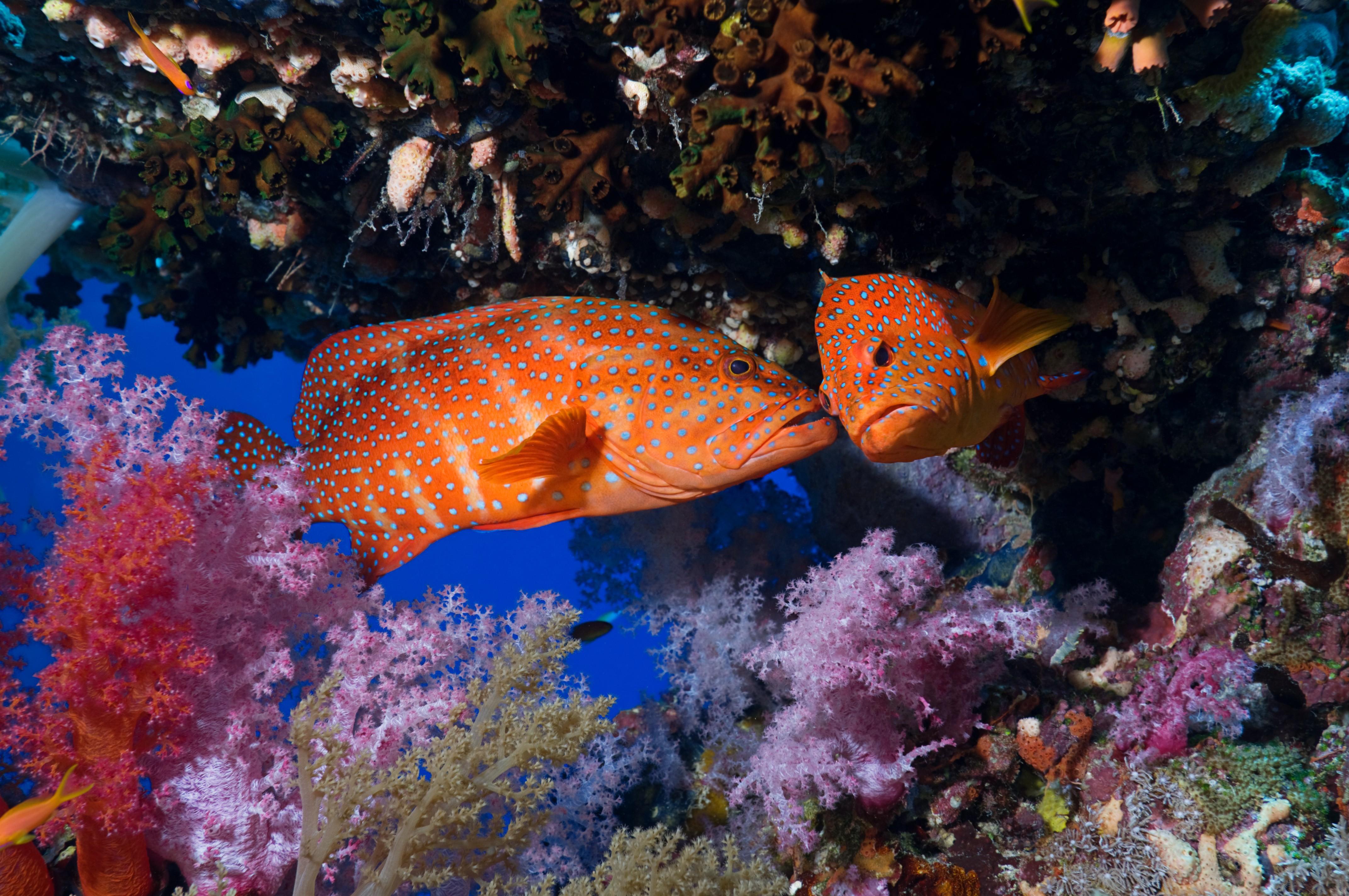 Wallpaper : animals, underwater, coral reef, National ... - photo#37