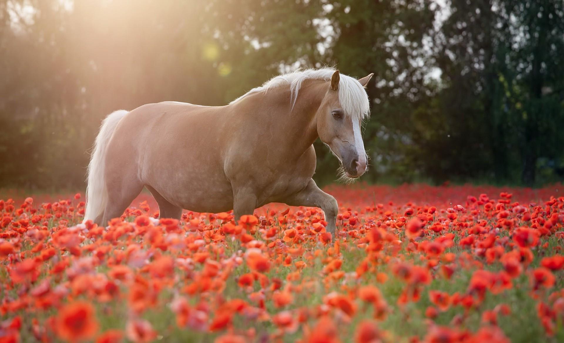 Мягкая музыкальная игрушка Лошадь в шляпе с цветком в зубах 22