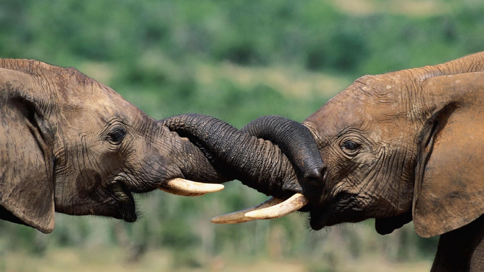 Fond D Ecran Herbe Faune Des Bebes Animaux Elephant