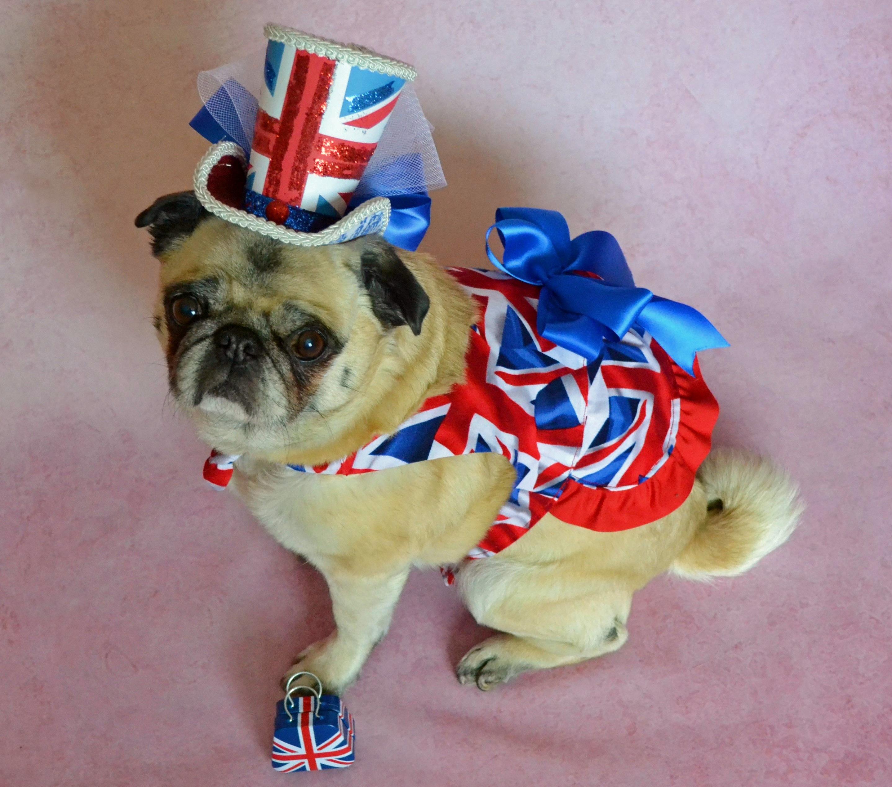 デスクトップ壁紙 帽子 イングランド 旗 イギリス人 ペット