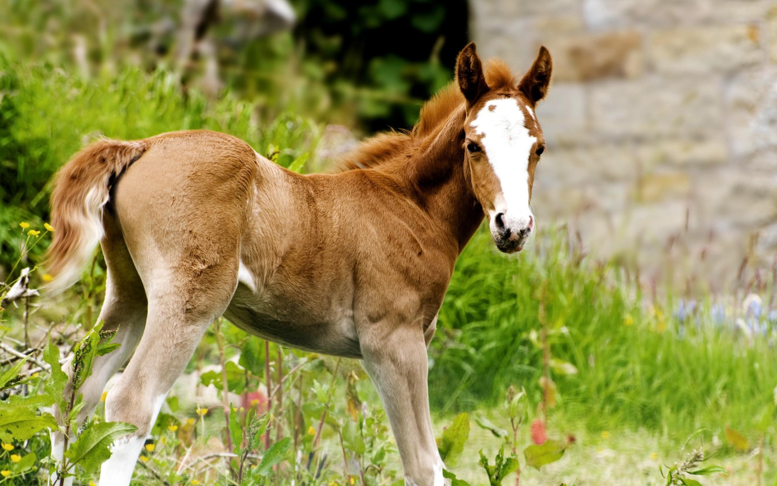Обои лошадь, жеребёнок. Животные foto 17