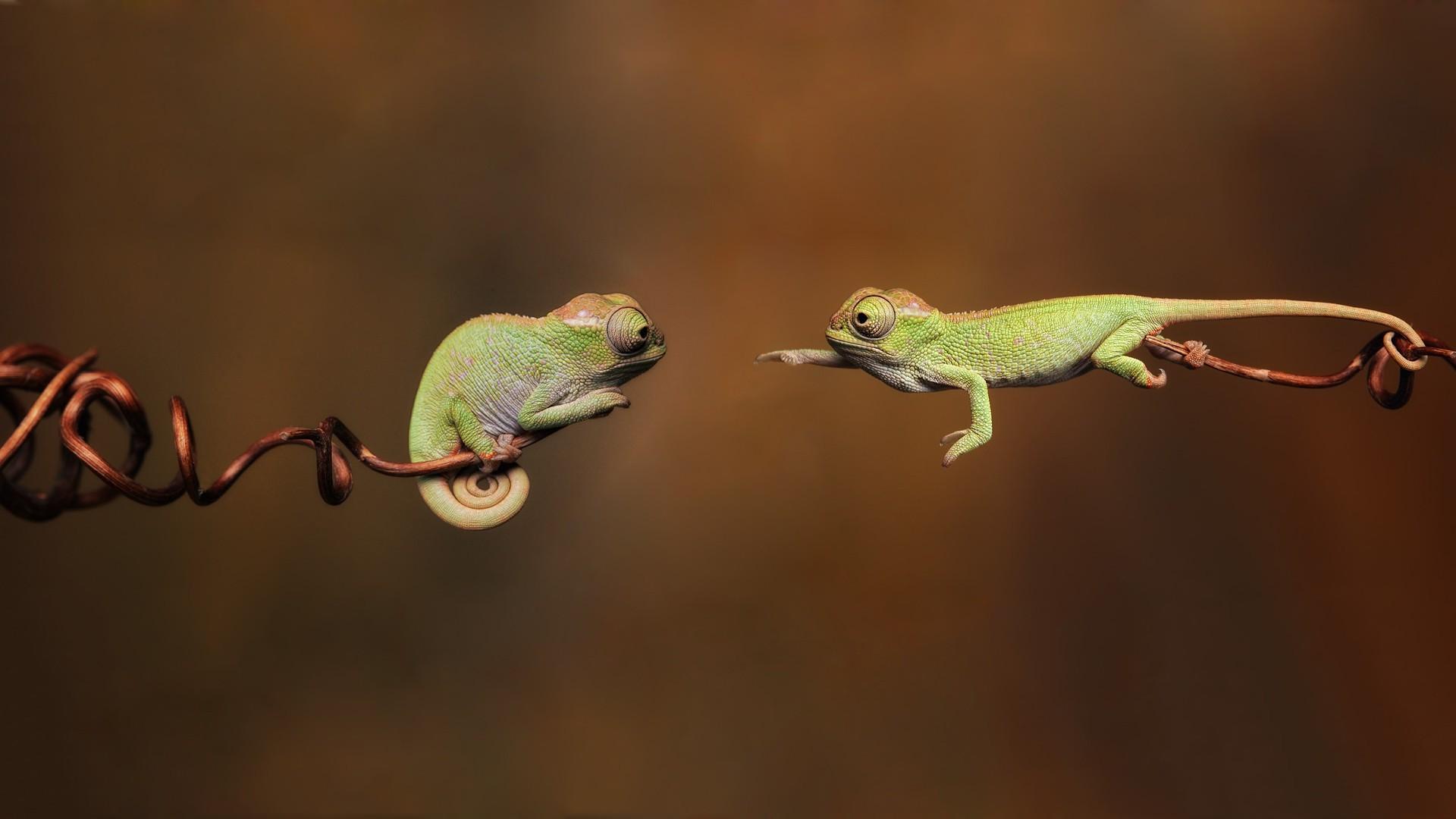 Wallpaper Animals Jumping Green Wildlife Blurred Hope