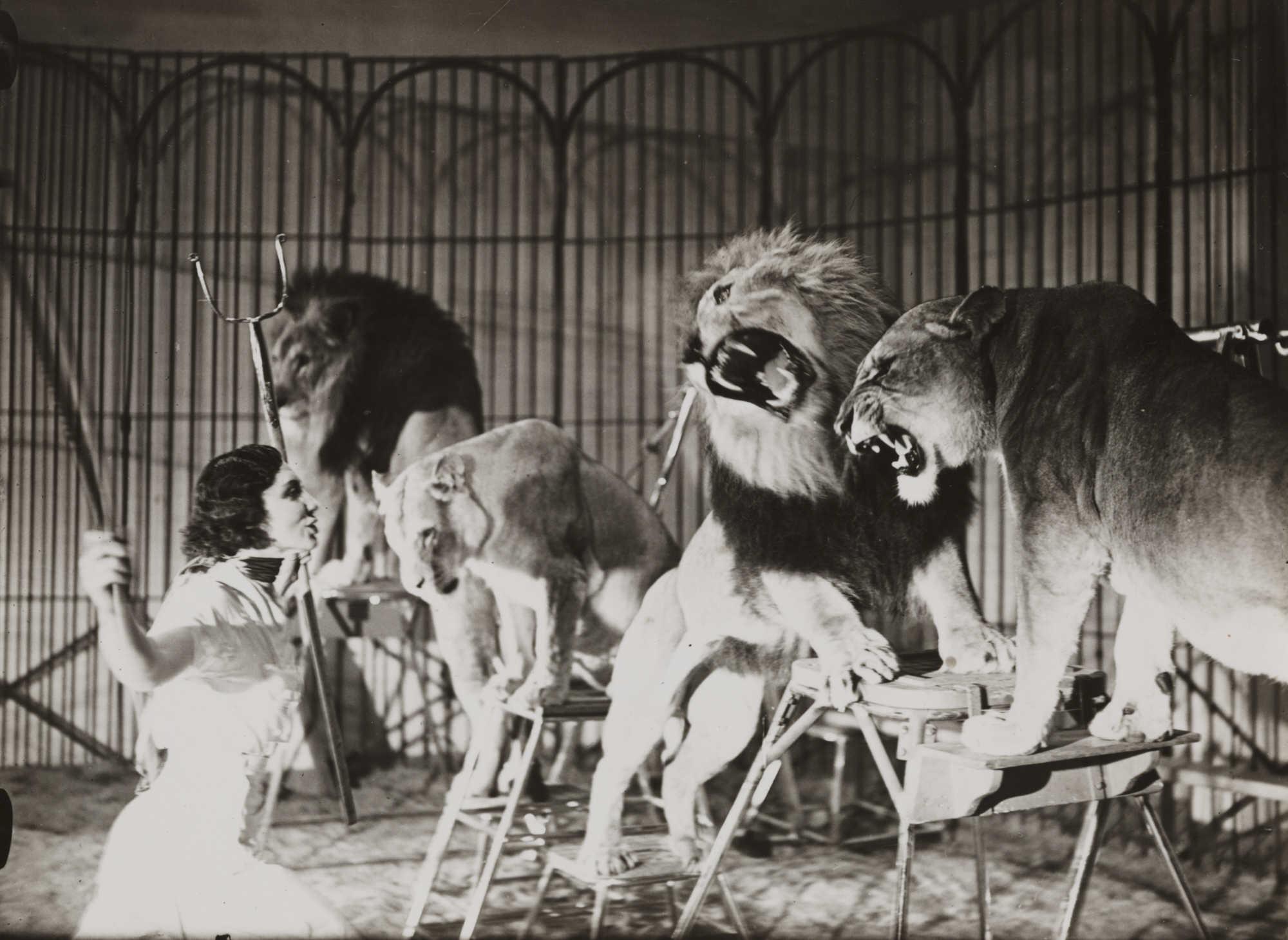 83 Gambar Hewan Karnivora Hitam Putih Gratis Terbaru