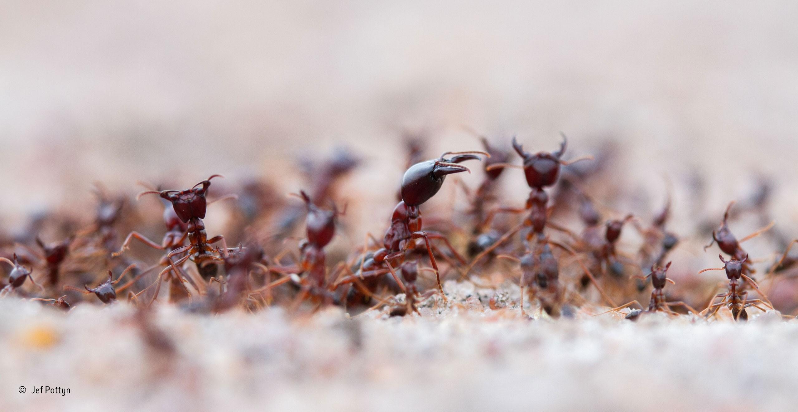ameisen im winter latest ameisen haben in ihrer. Black Bedroom Furniture Sets. Home Design Ideas