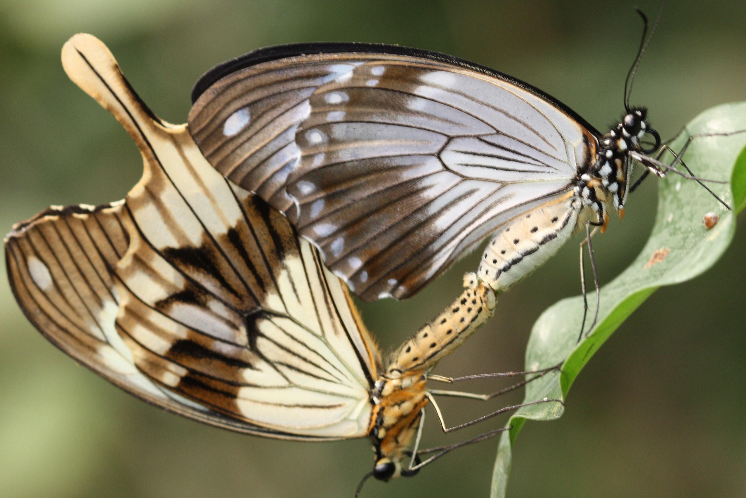 Обои мир бабочек, красота, цветок. Макро foto 16