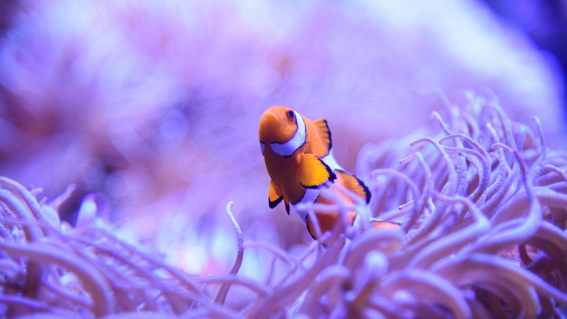 Hintergrundbilder Tiere Natur Fotografie Lila Makro